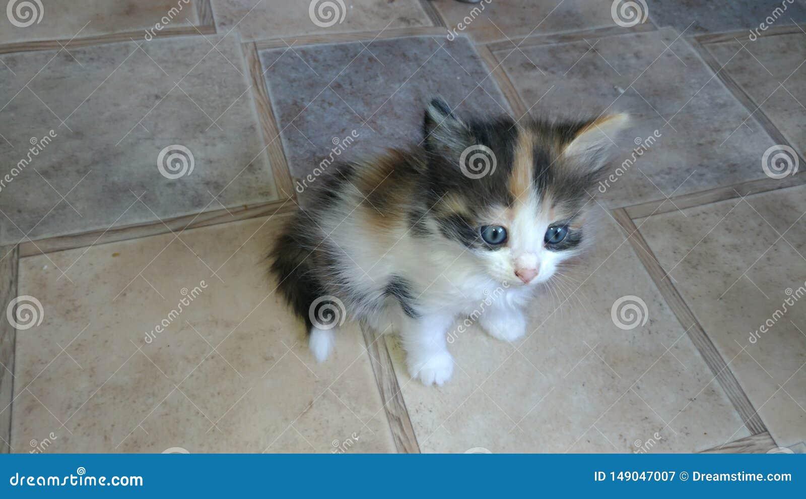 Gattino affascinante