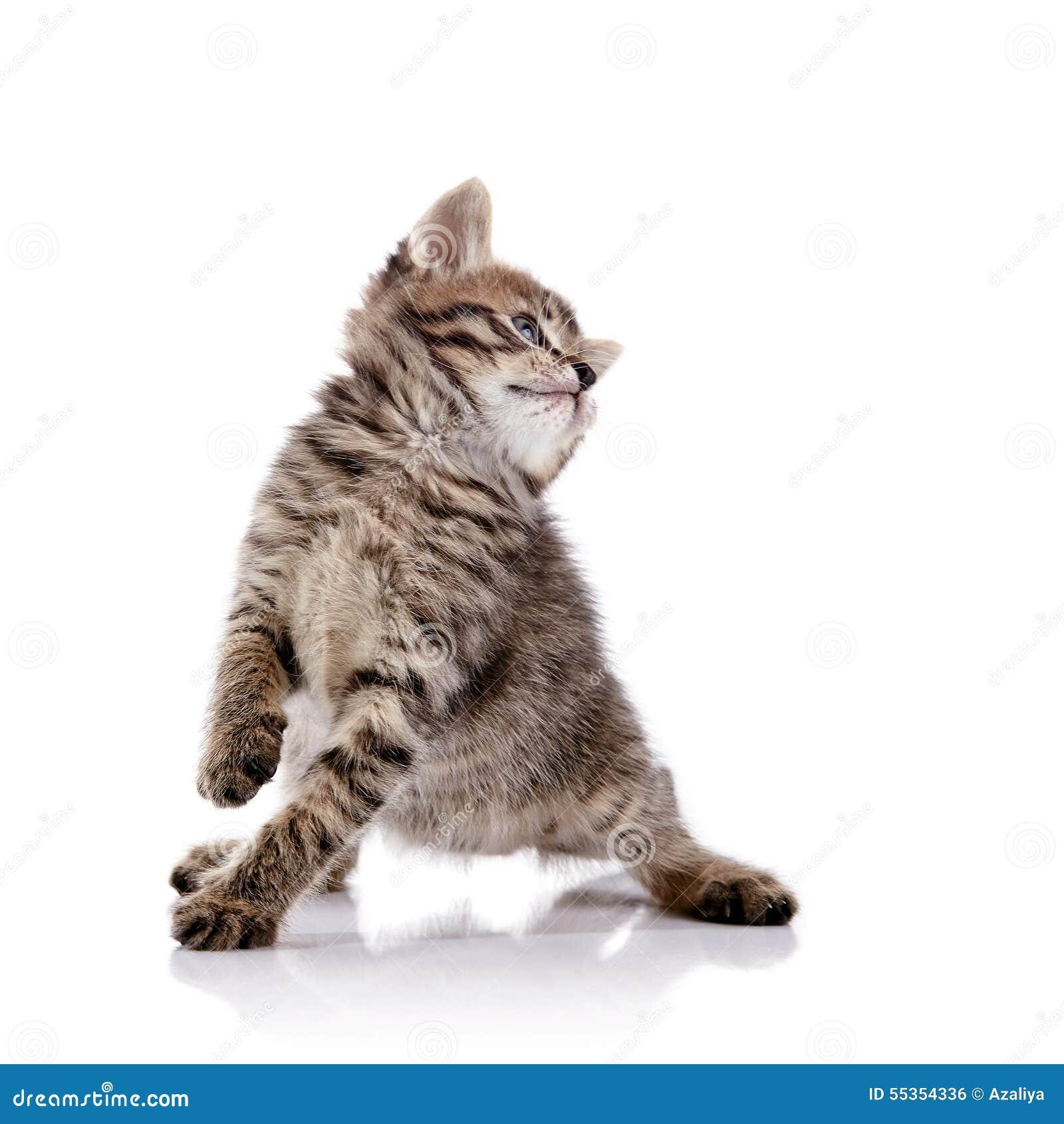 Gattino allegro adorabile a strisce