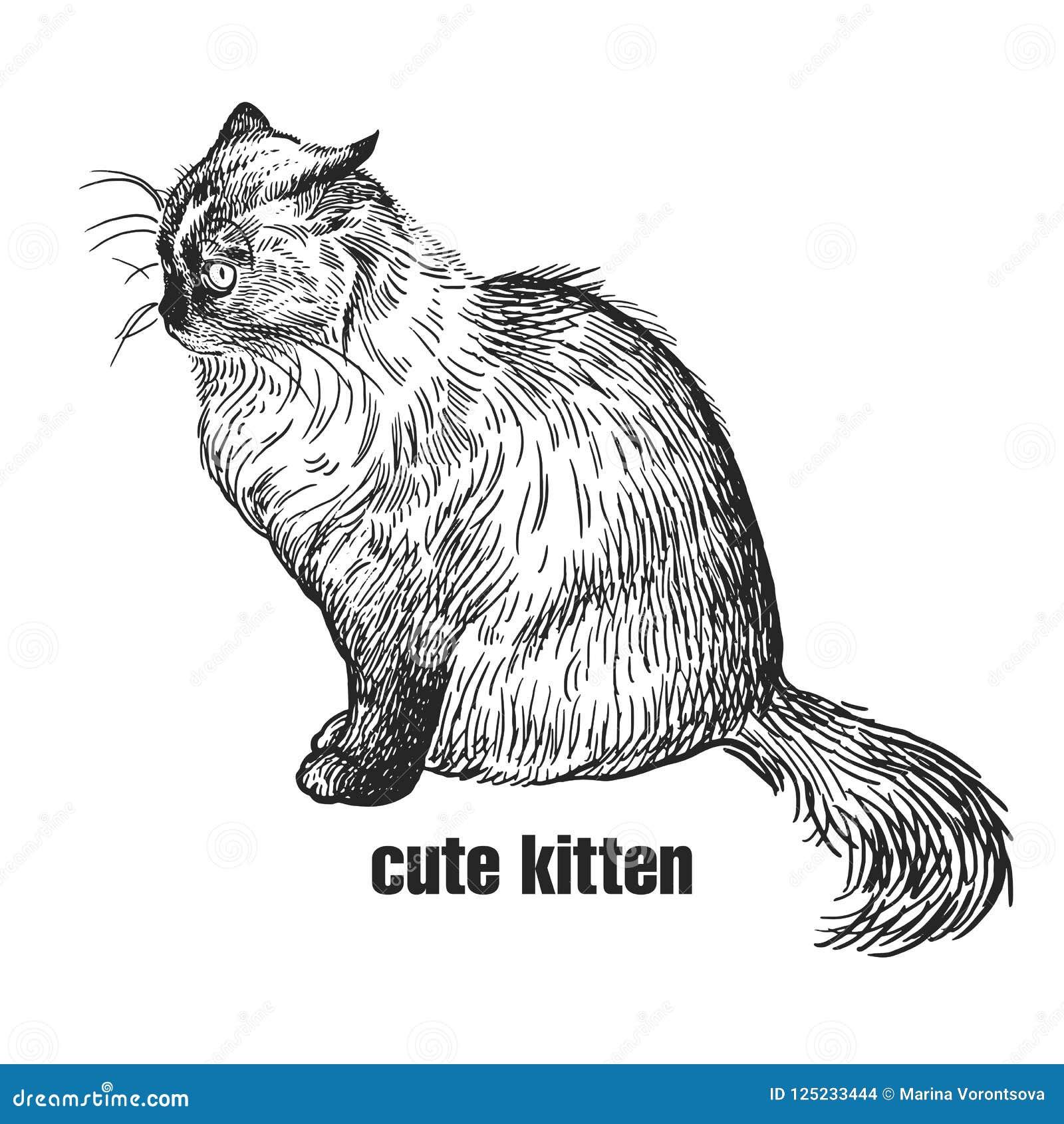 Gattino Animale Domestico Sveglio Disegno In Bianco E Nero Fatto A