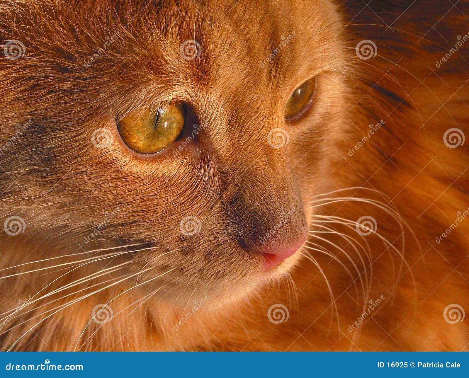 Gattino calmo