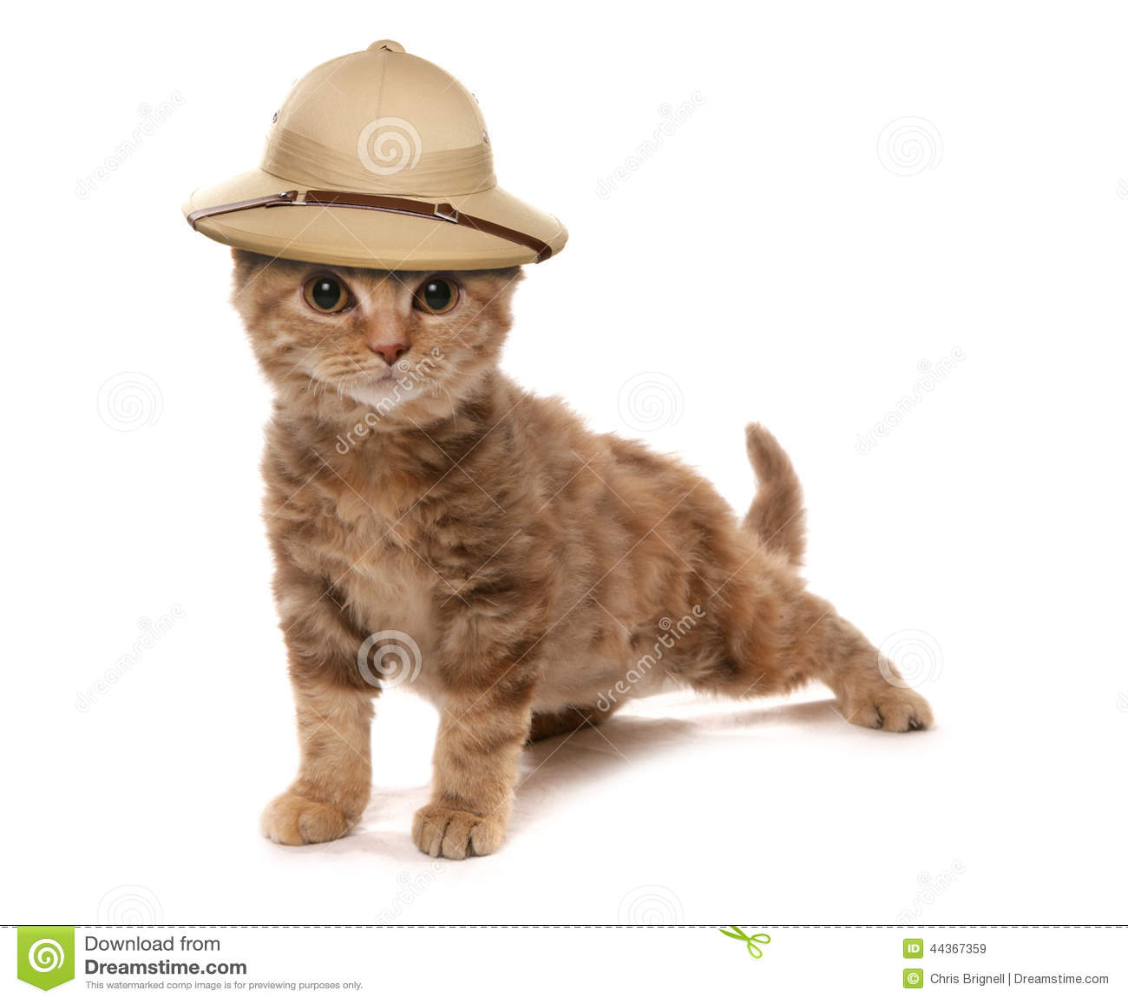 Gattino che porta un cappello degli esploratori della giungla del safair