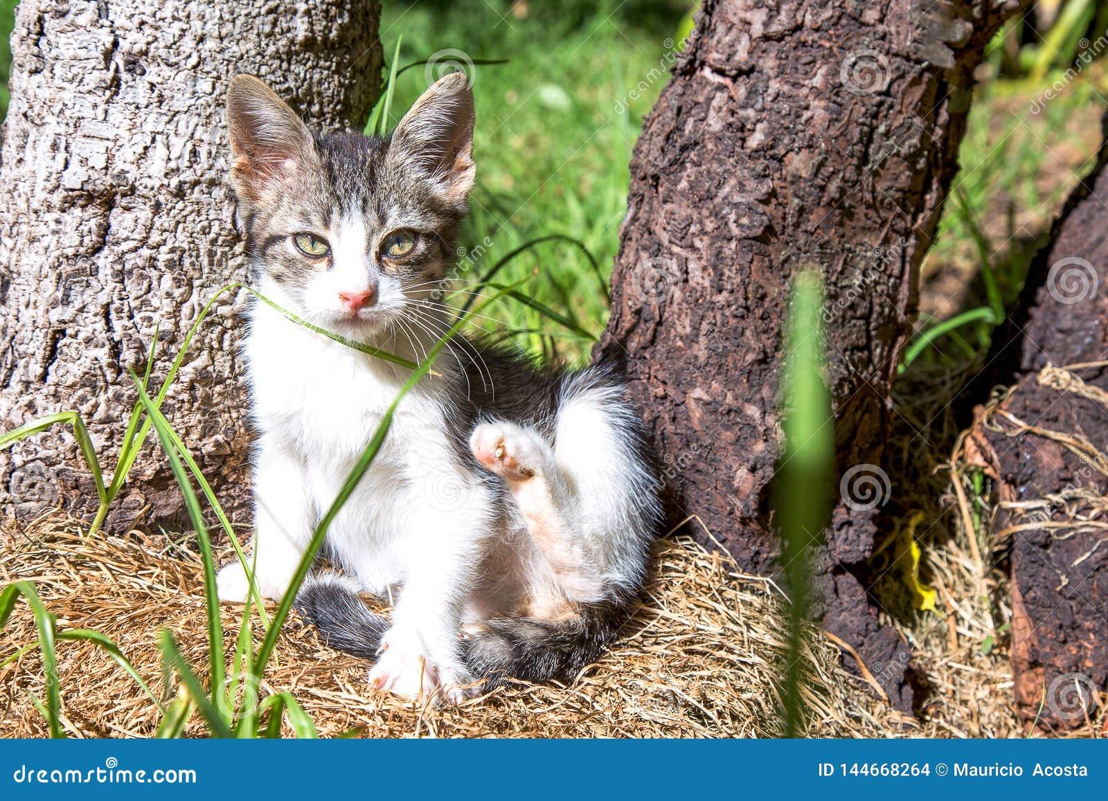 Gattino che prova a graffiarsi