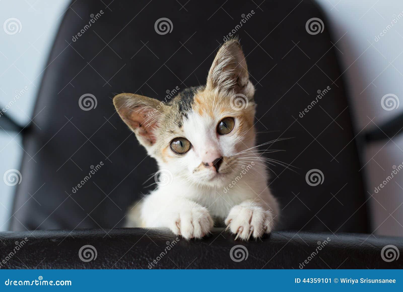 Gattino del bambino che si siede sulla sedia
