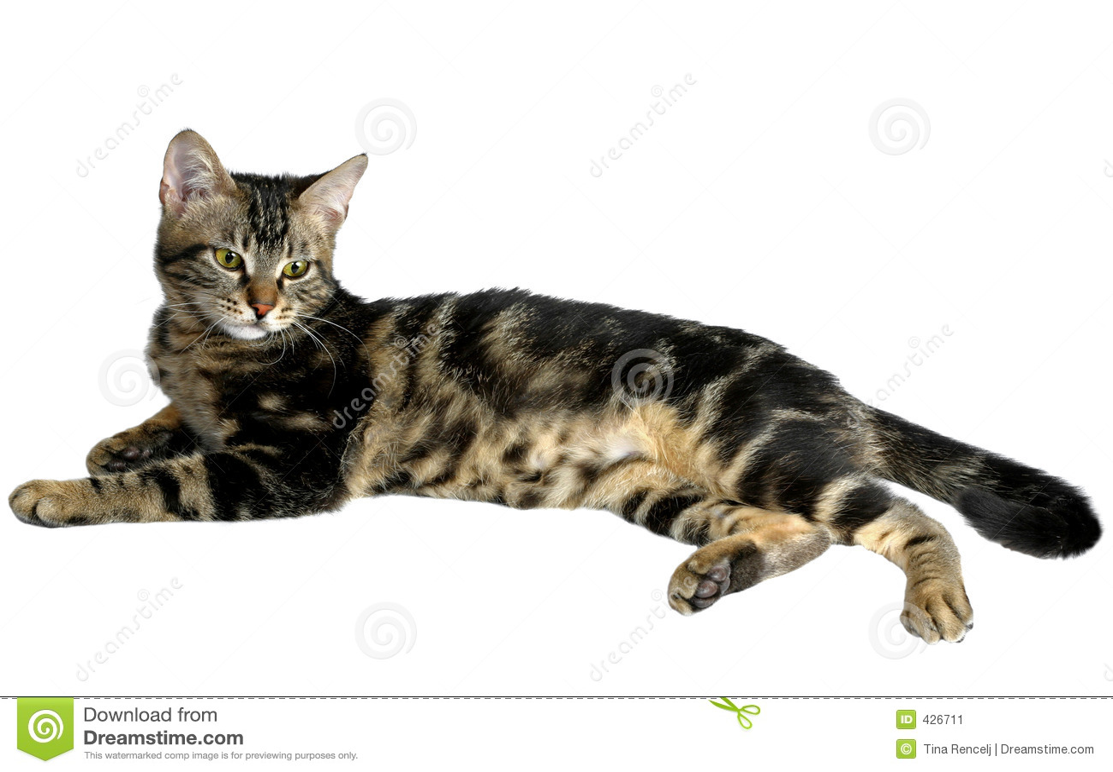 Gattino del Tabby II