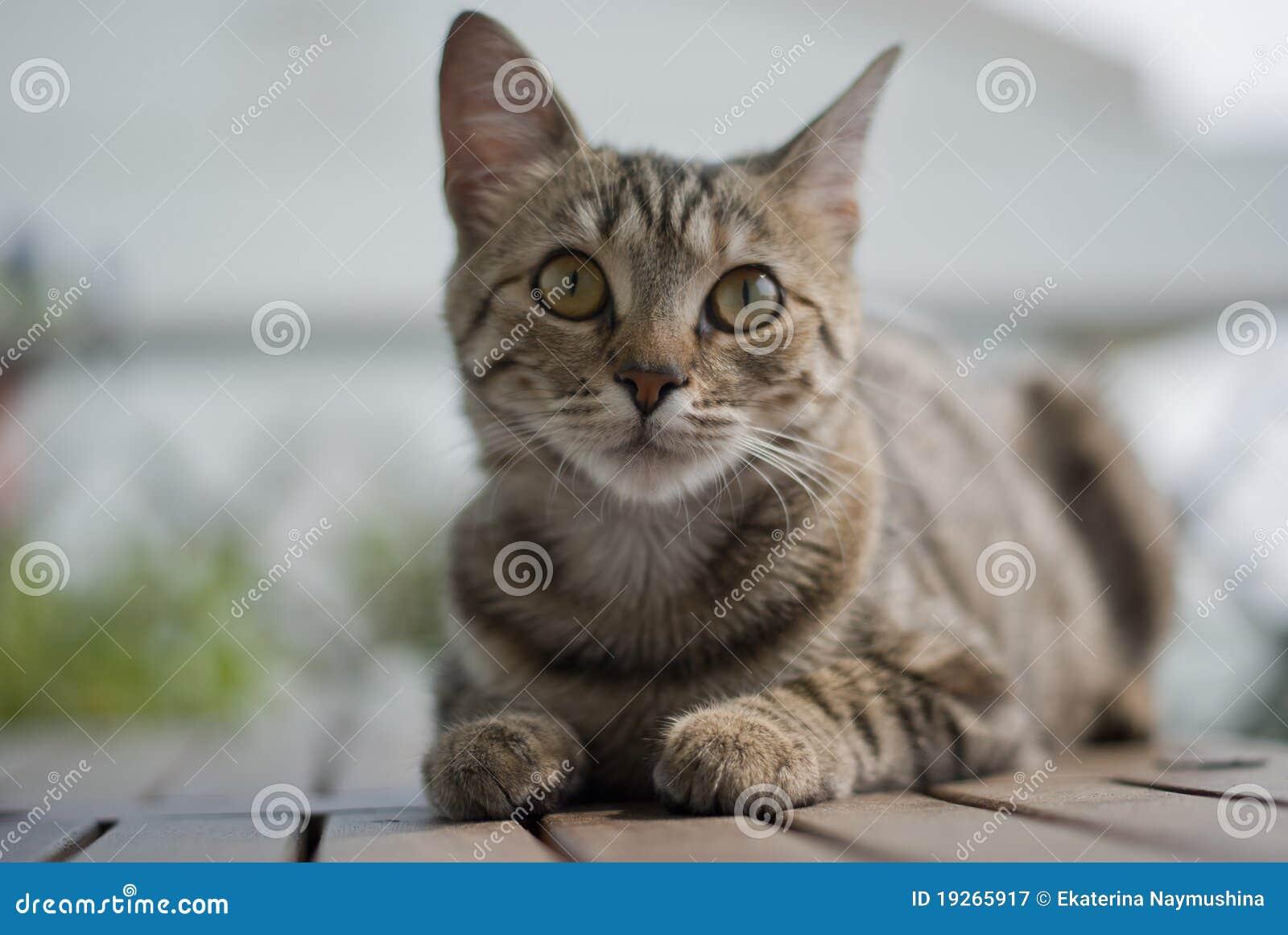 Gattino del Tabby su una tabella del giardino