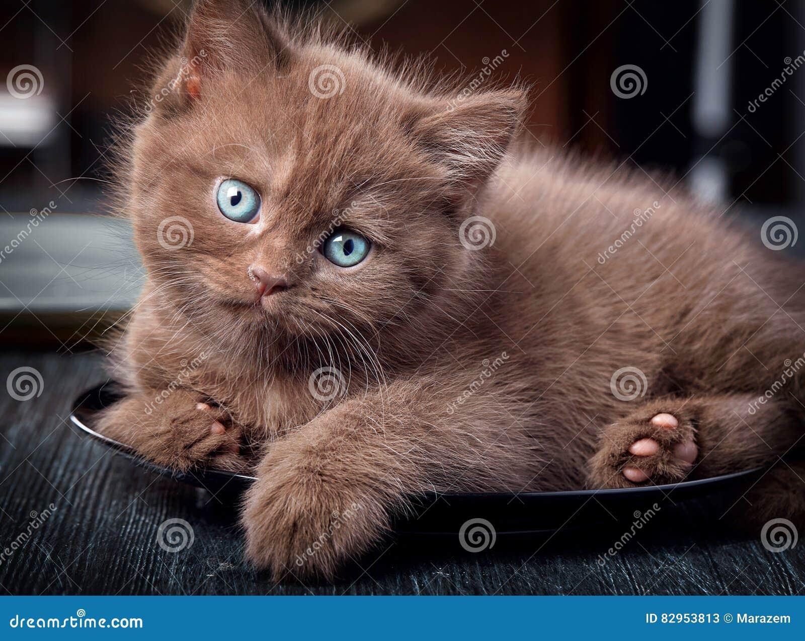 Gattino di Brown sulla banda nera