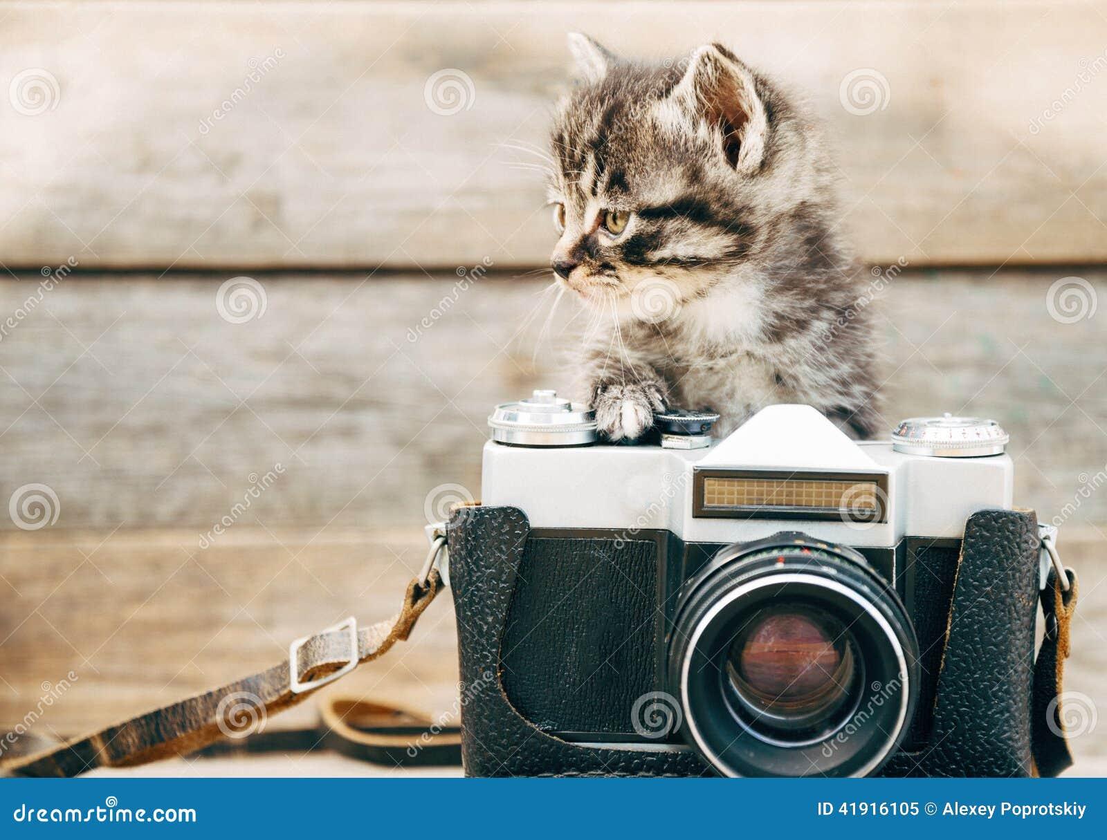 Gattino di curiosità con la vecchia macchina fotografica