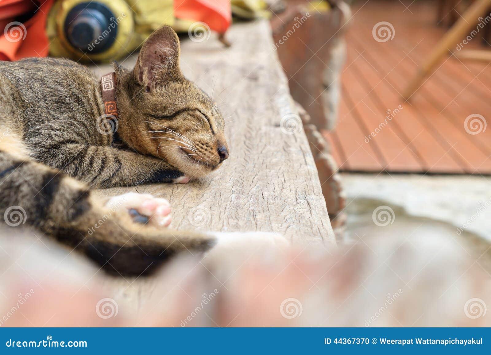 Gattino di sonno