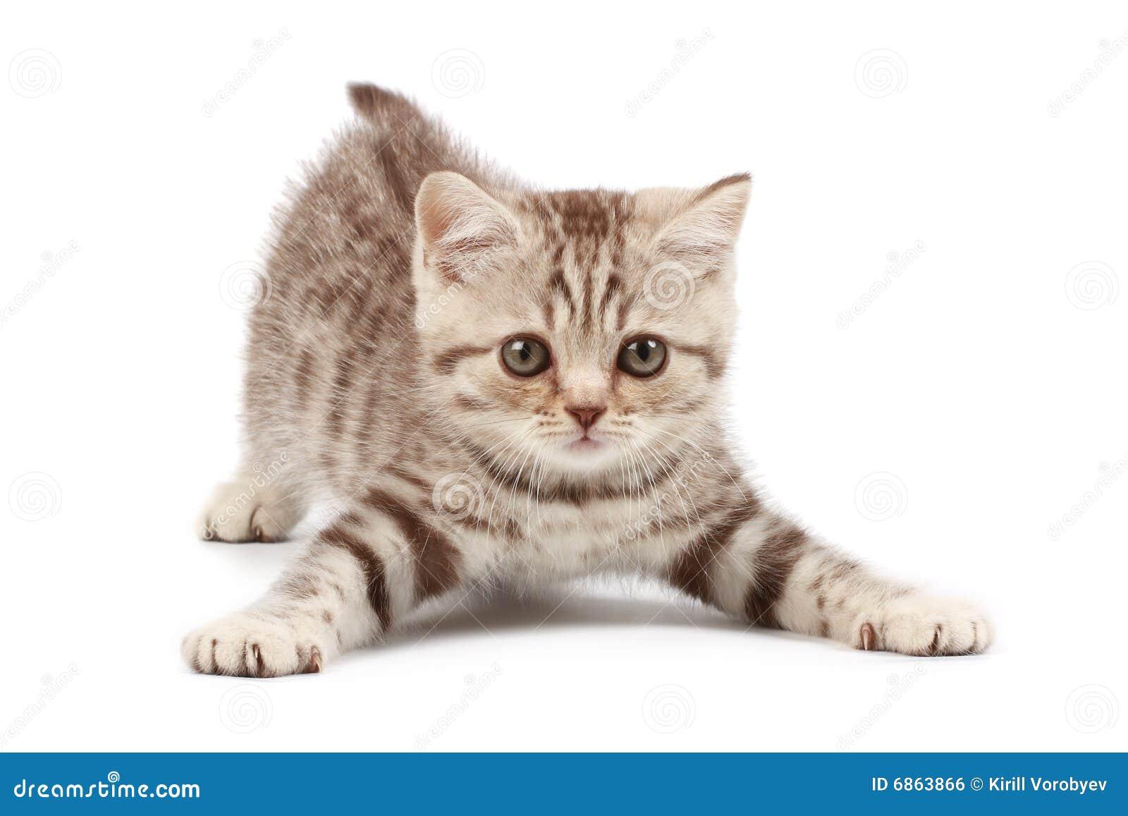 Gattino divertente