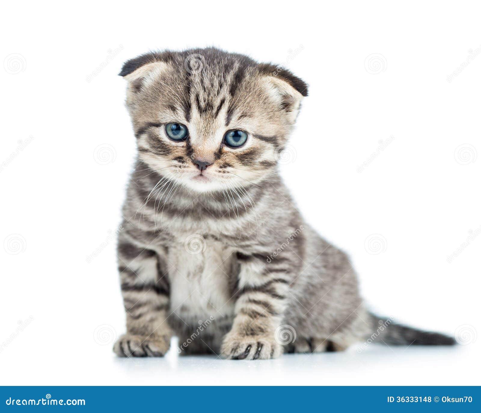 Gattino divertente del gatto del bambino