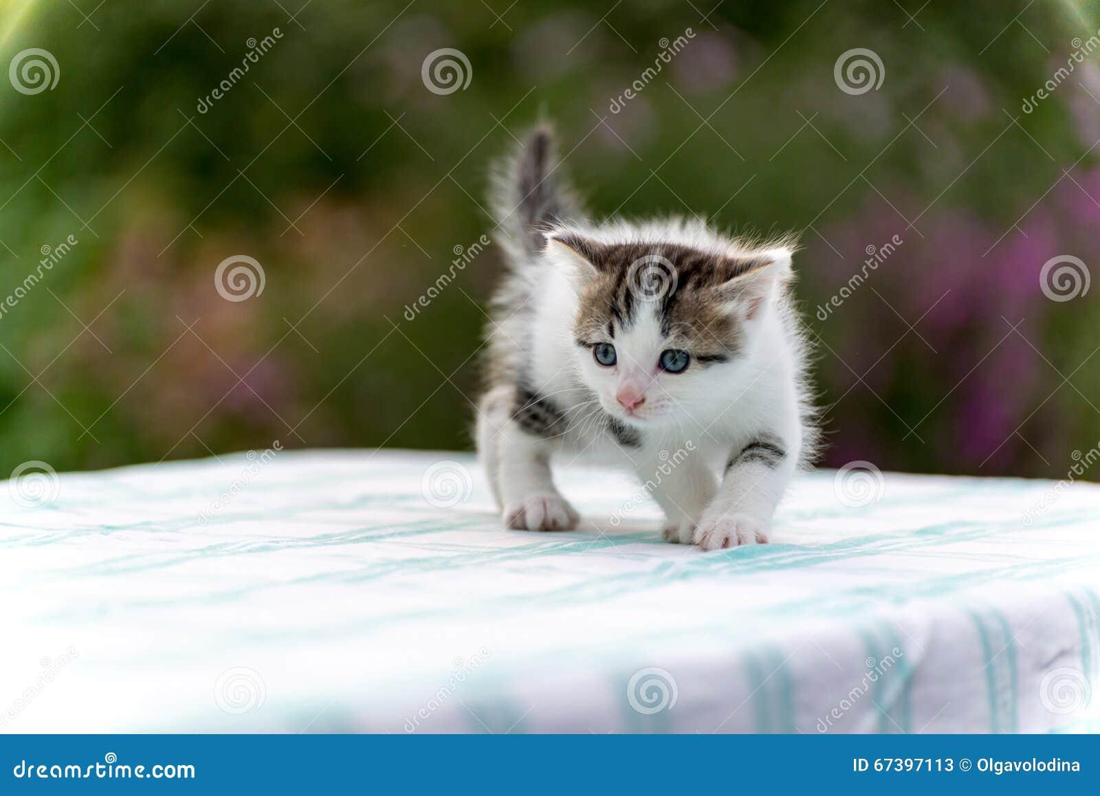 Gattino macchiato che sta sulla tavola nel giardino