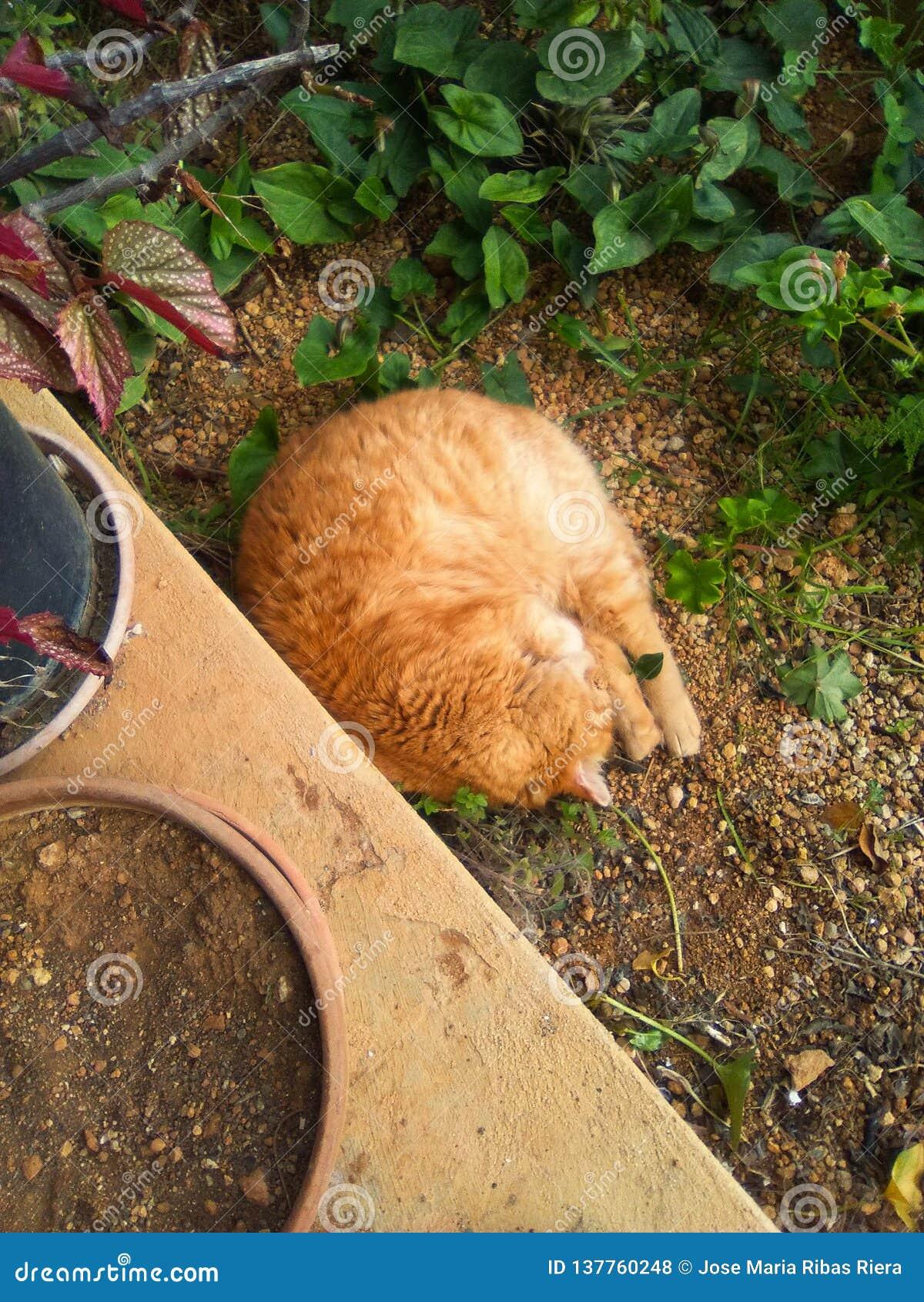 Gattino nel giardino
