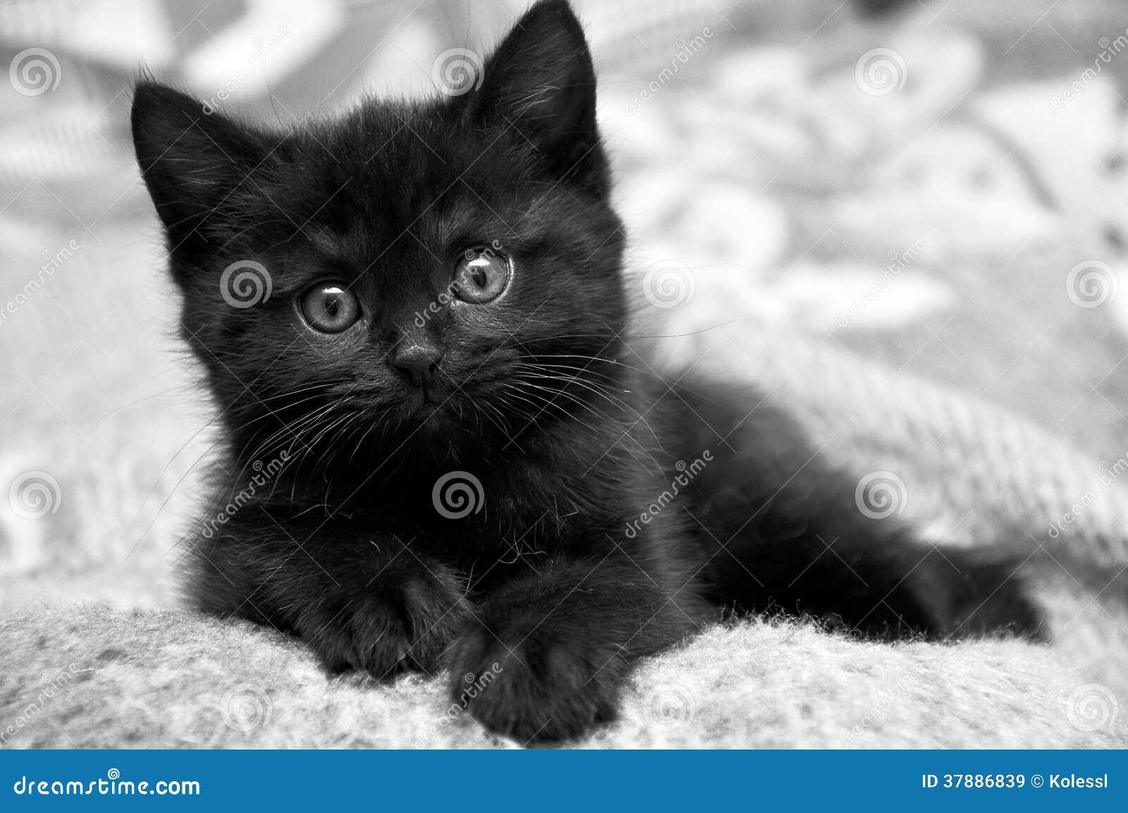 Gattino nero a casa