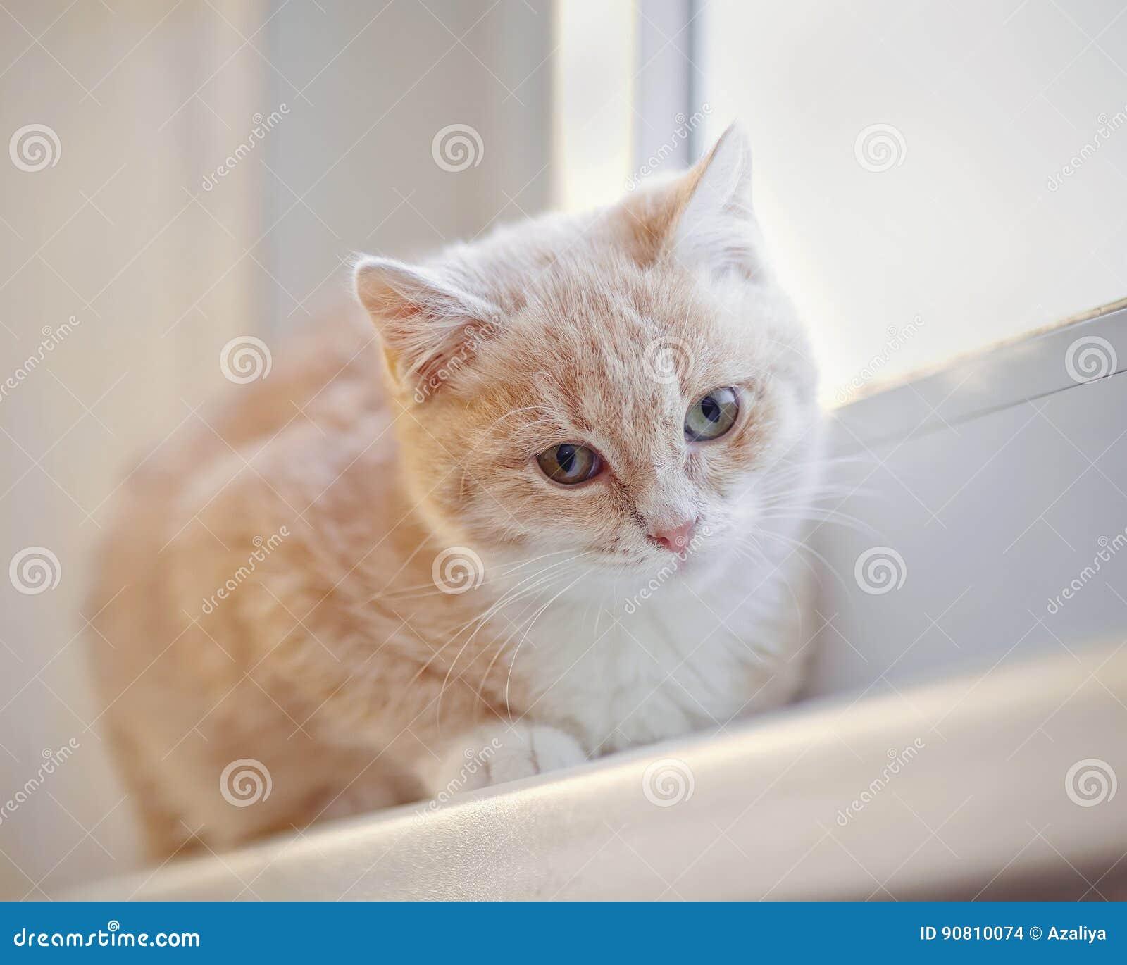 Gattino a strisce rosso,chiaro sul davanzale
