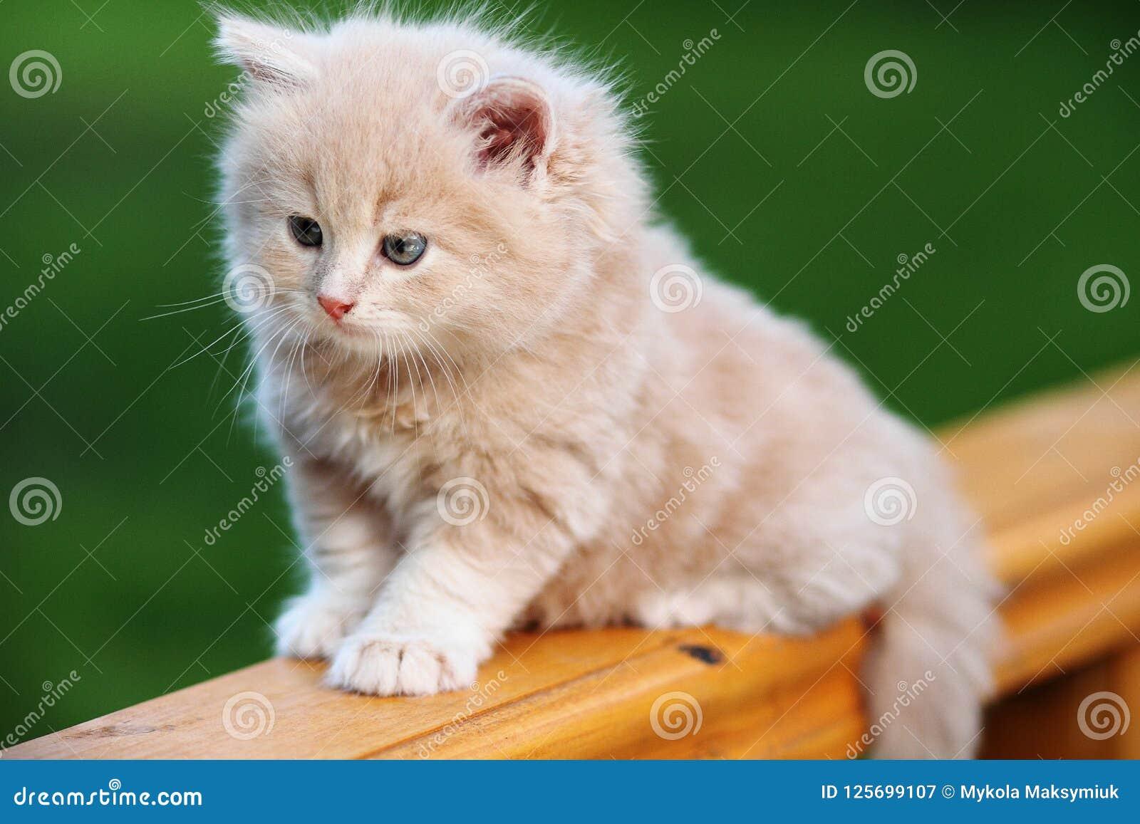 Gattino rosso sul banco