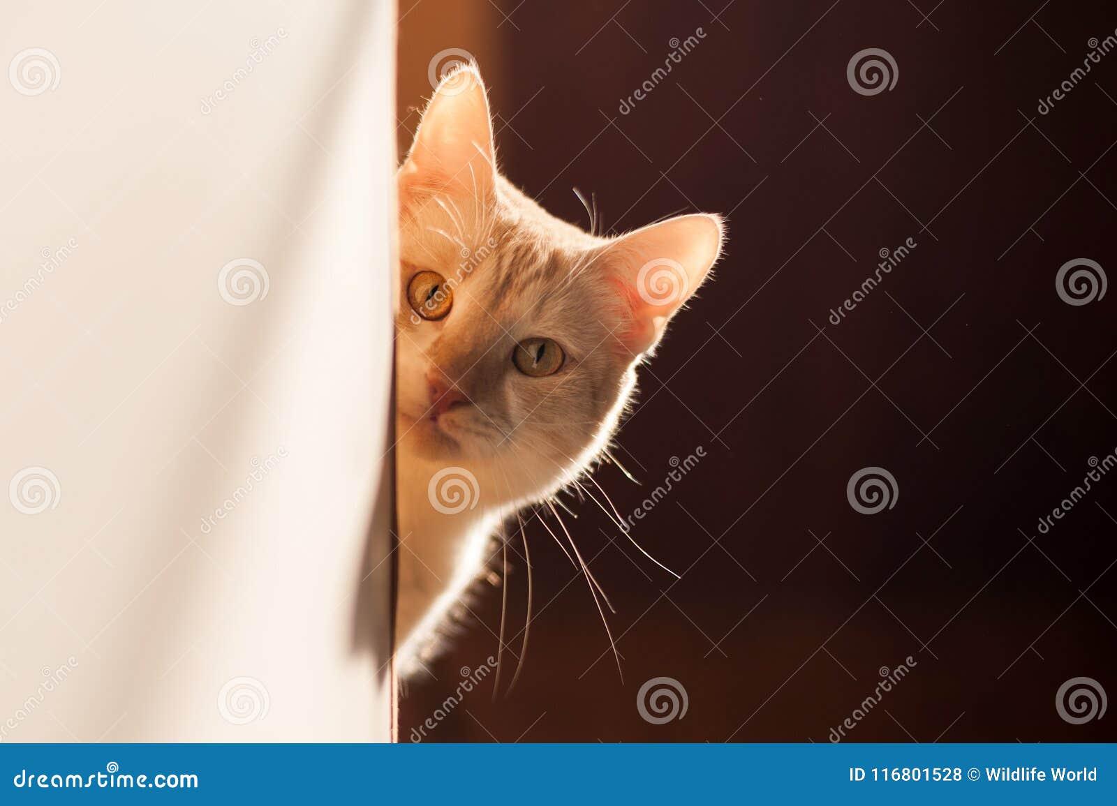 Gattino rosso sveglio che dà una occhiata fuori all angolo su una bella luce