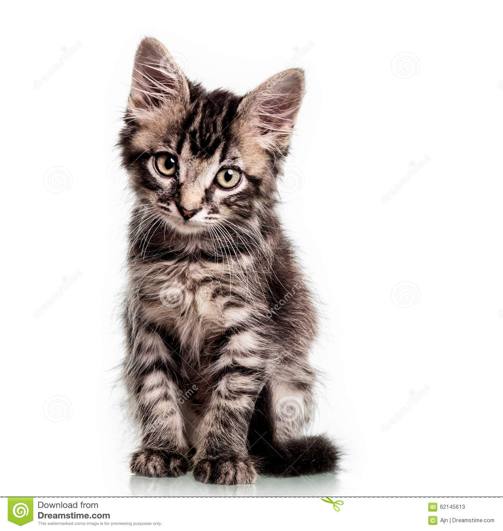 Gattino simile a pelliccia sveglio