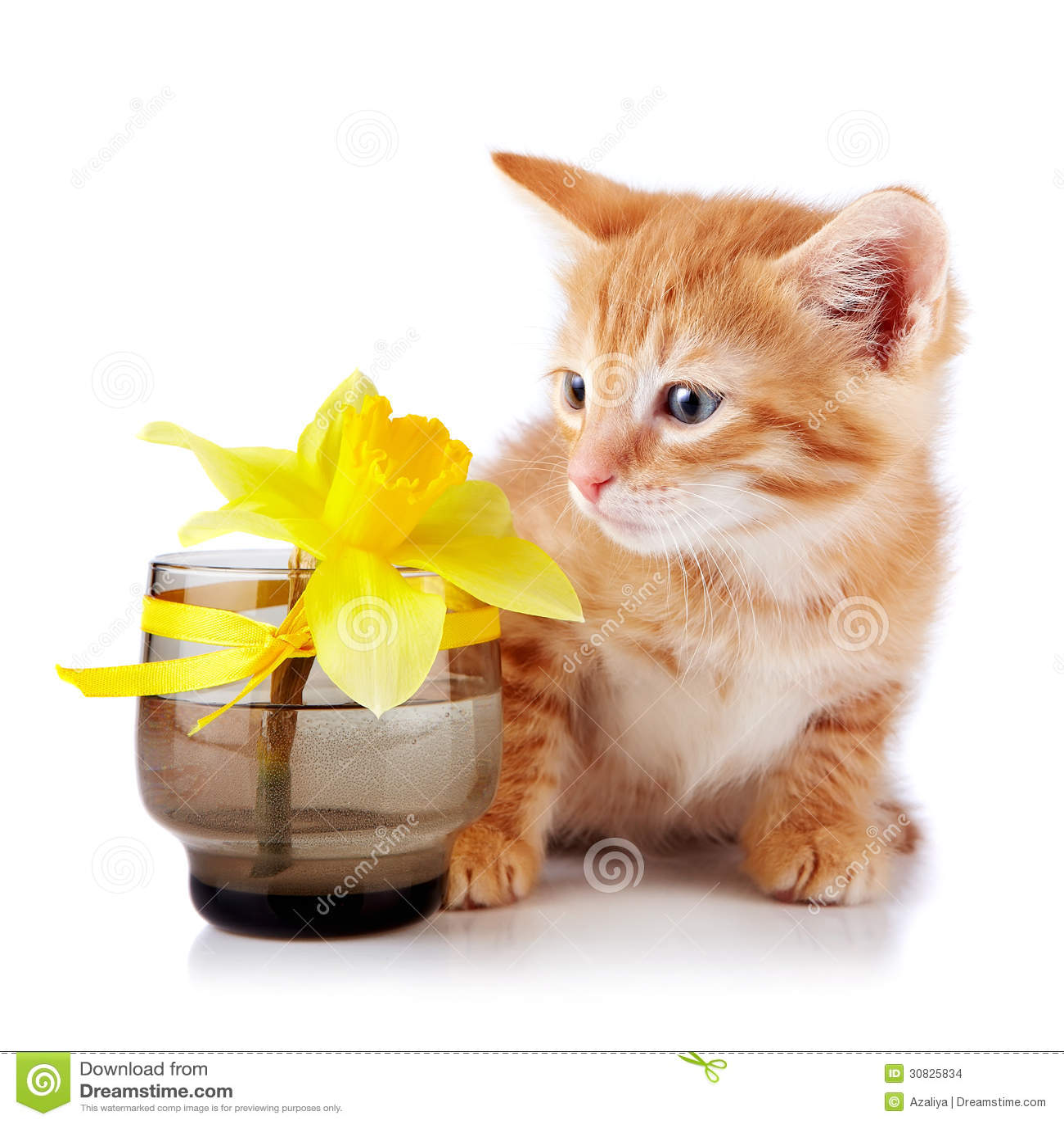 Gattino a strisce rosso con un fiore giallo.