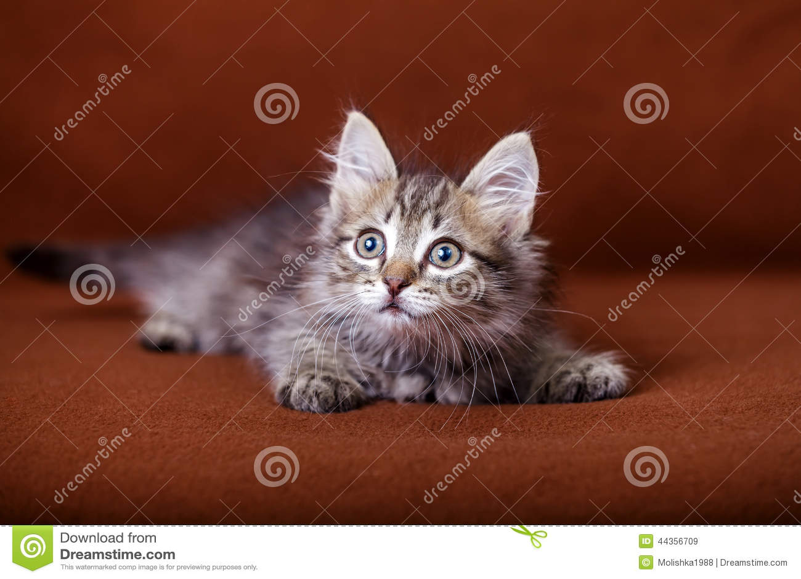 Gattino a strisce sveglio