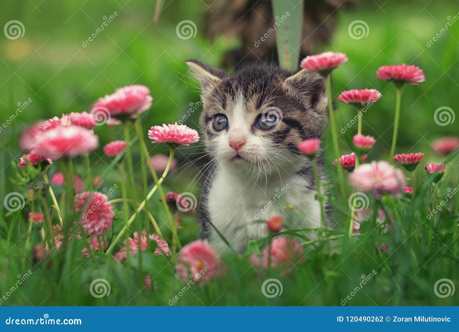 Gattino sveglio nei fiori