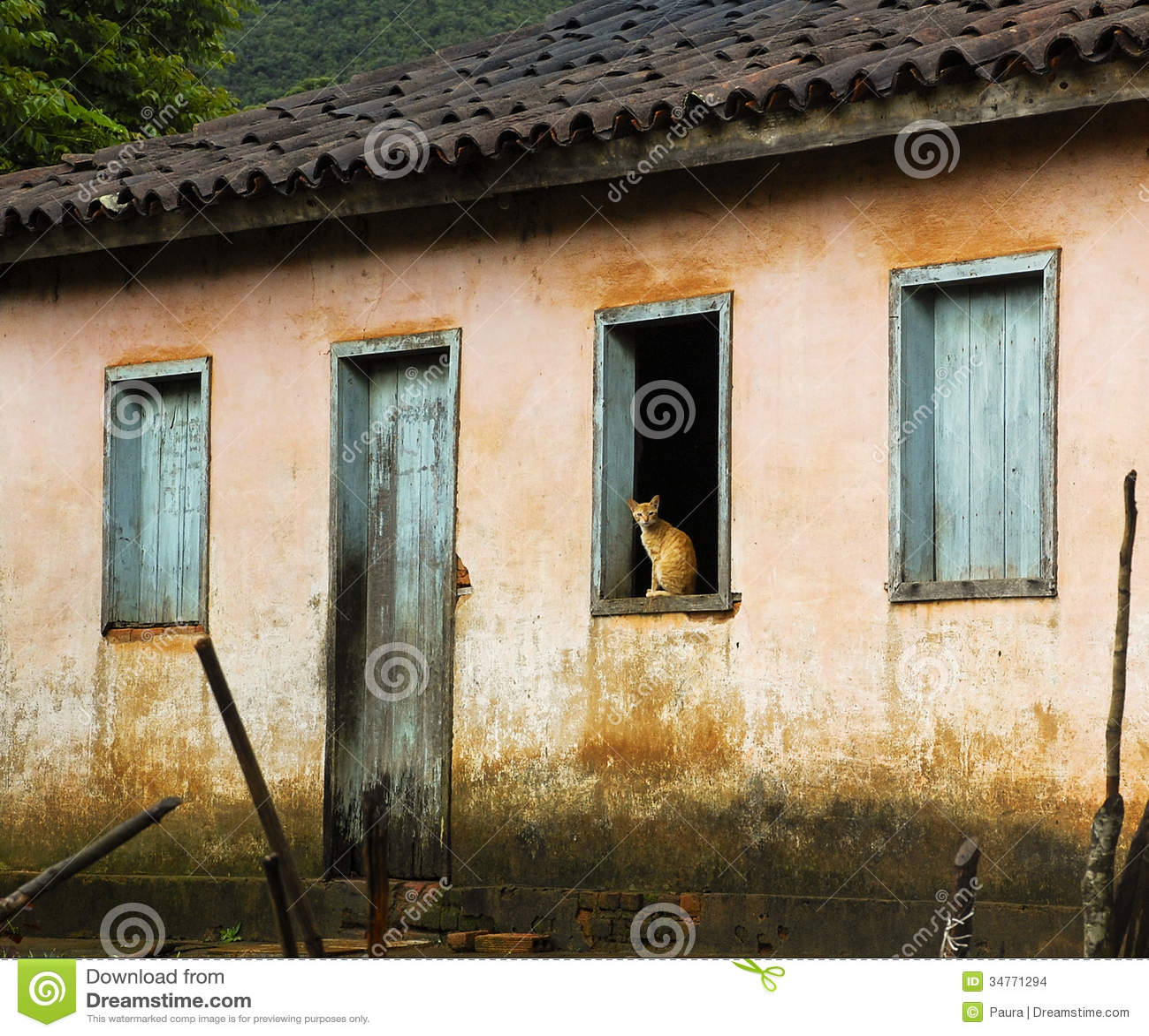 Gatto alla finestra fotografia stock immagine di colore for Finestra immagini