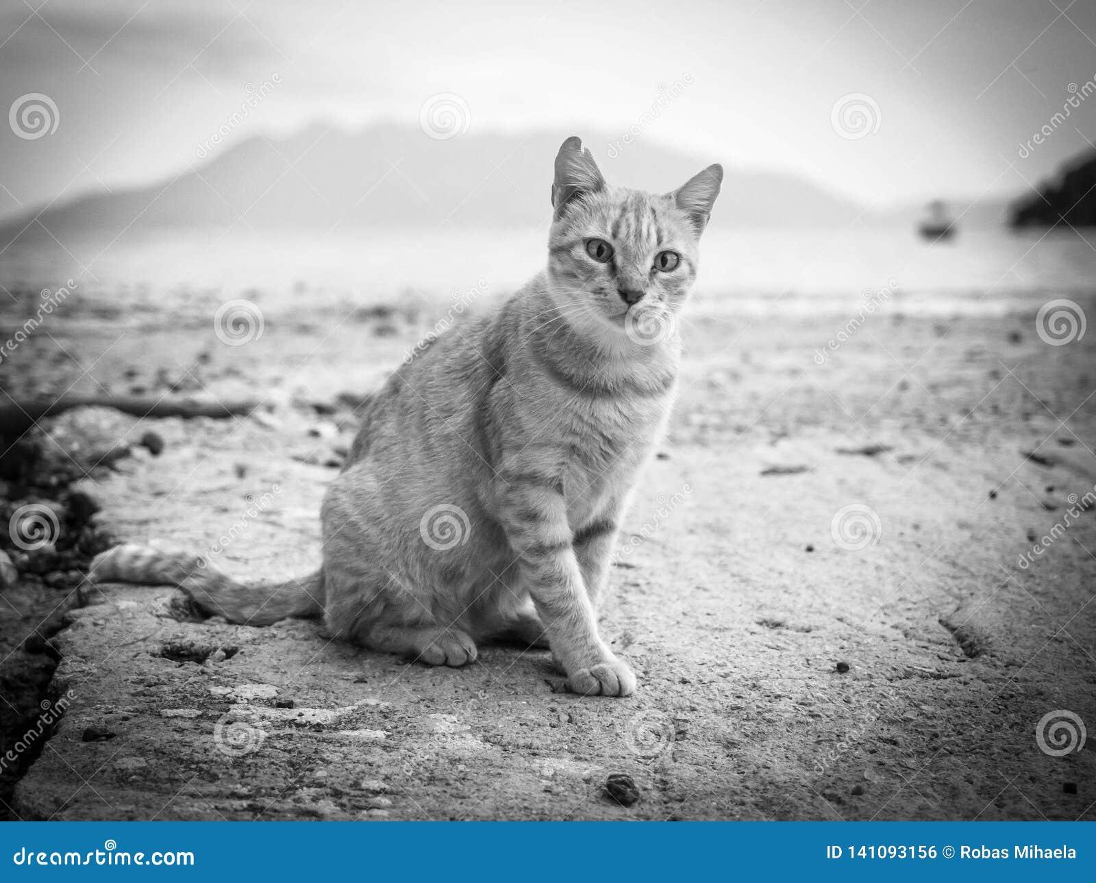 Gatto Arancio Che Cammina Sulla Spiaggia Nelle Immagini In