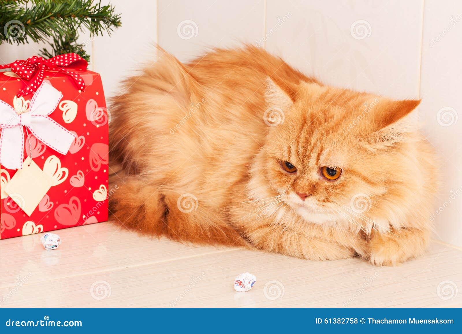 Gatto Arancio Sveglio Con Il Contenitore Di Regalo Rosso Fotografia