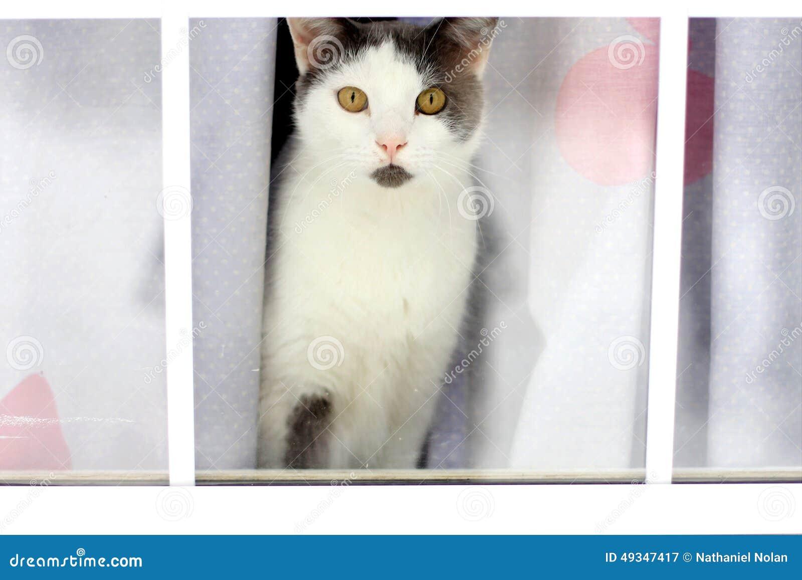 Gatto Bianco E Nero Che Guarda Attraverso La Finestra