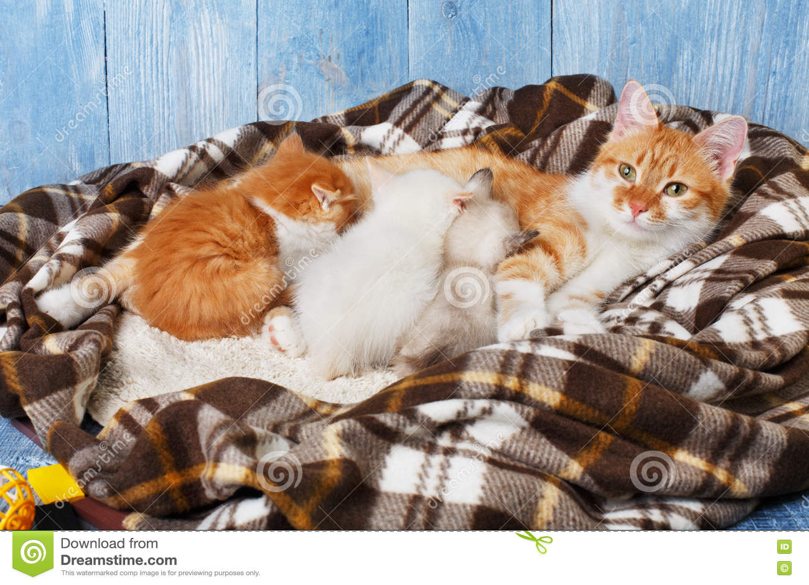 Gatto che cura i suoi piccoli gattini alla coperta del for Piccoli piani di coperta