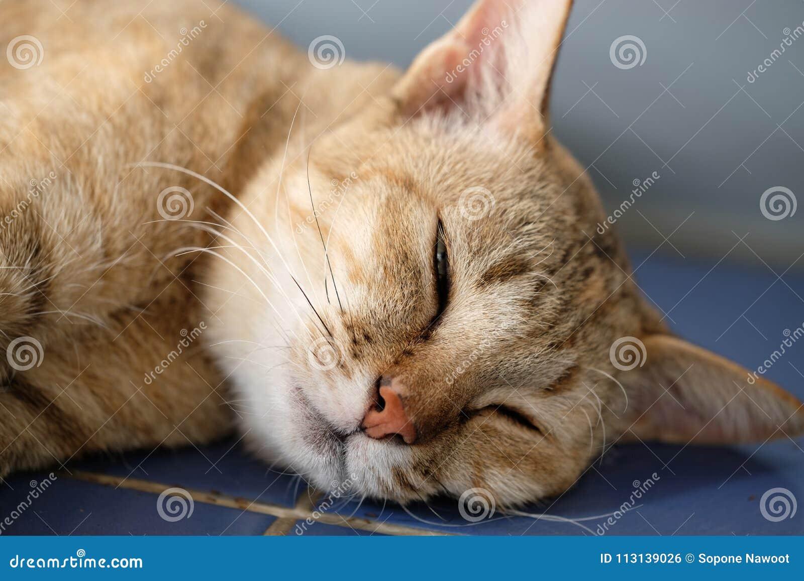 Ceramica antica faenza piastrella riccardo gatti con cornice eur