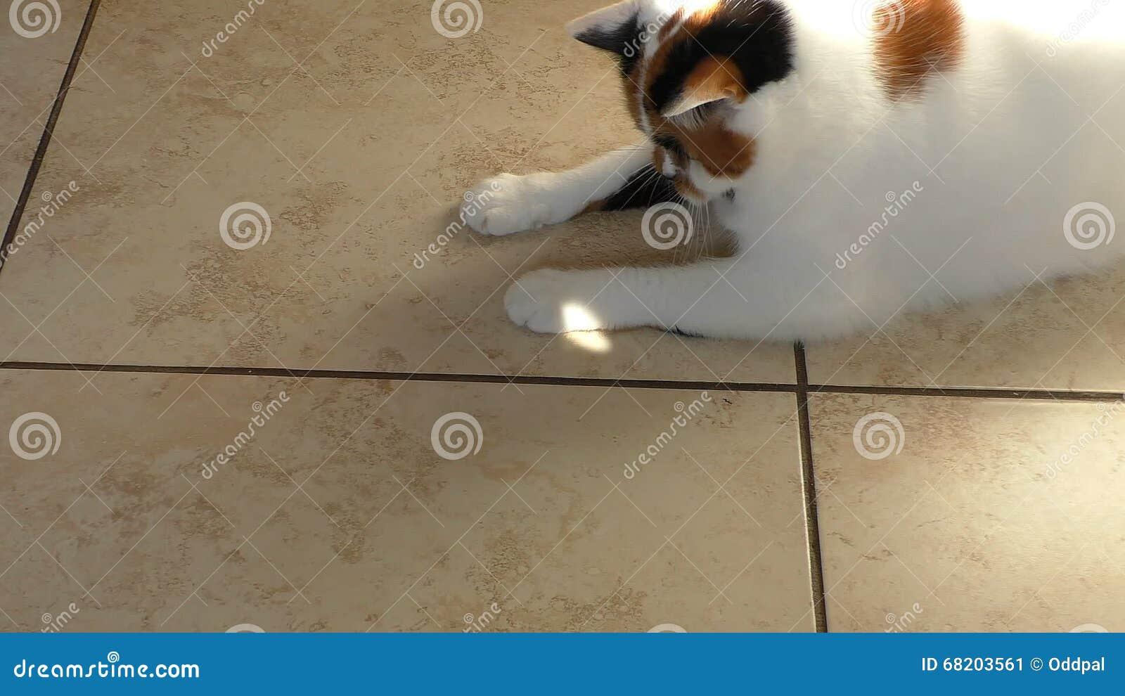 Gatto che gioca con il raggio del sole sul pavimento piastrellato