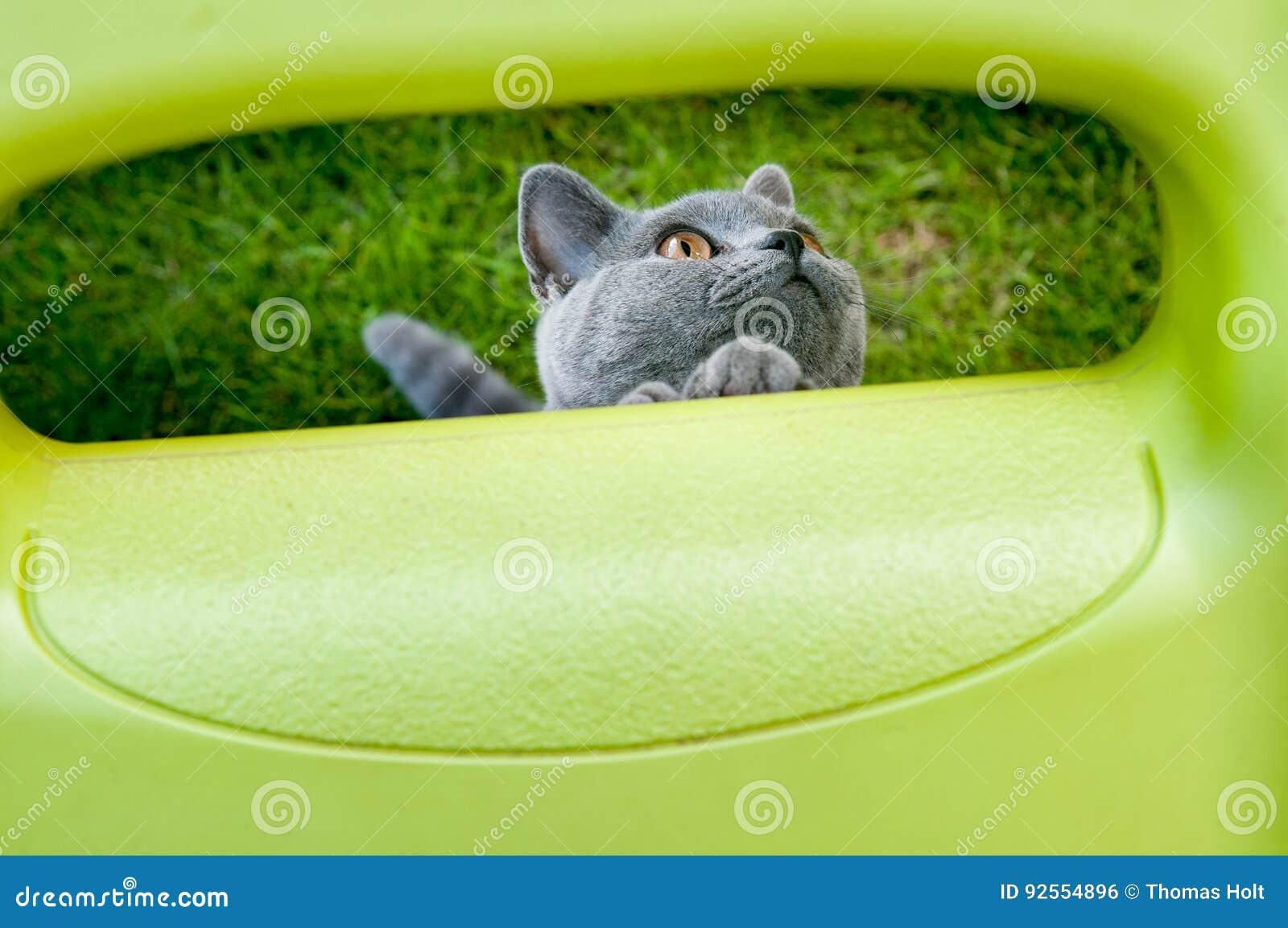 Gatto che gioca fuori nel giardino