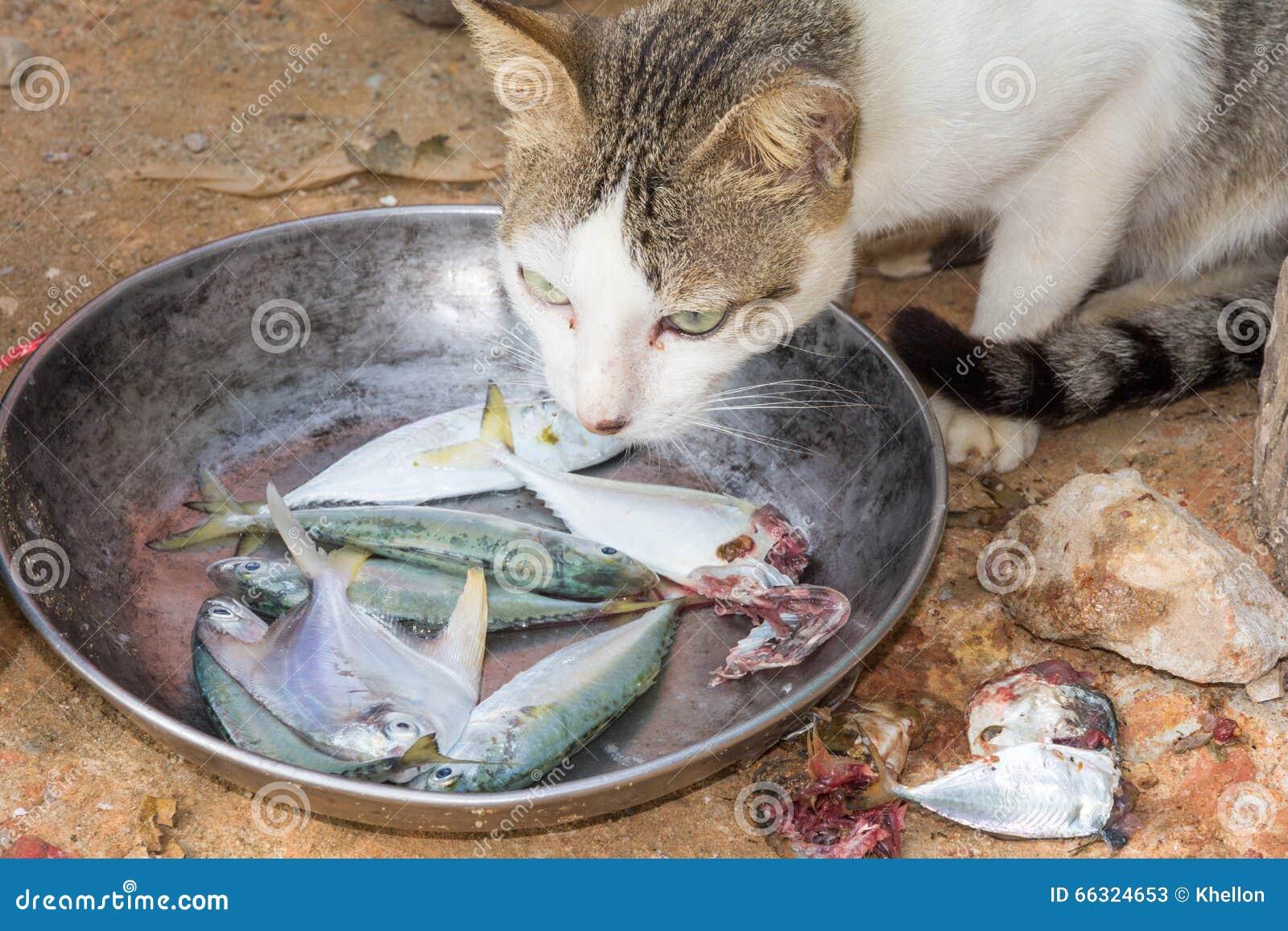 Gatto Che Mangia I Pesci Immagine Stock Immagine Di Consumo 66324653