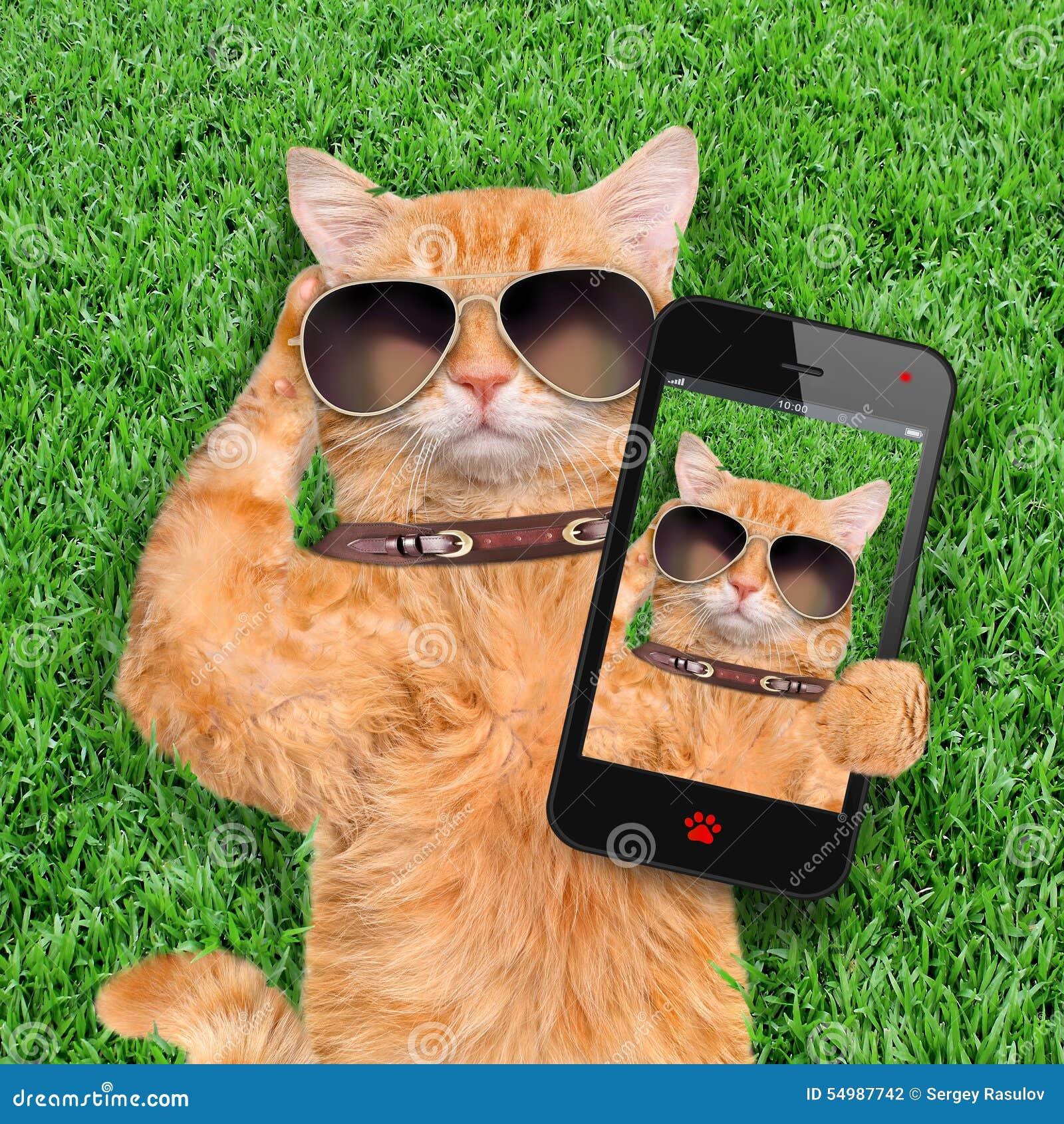 Gatto che prende un selfie con uno smartphone