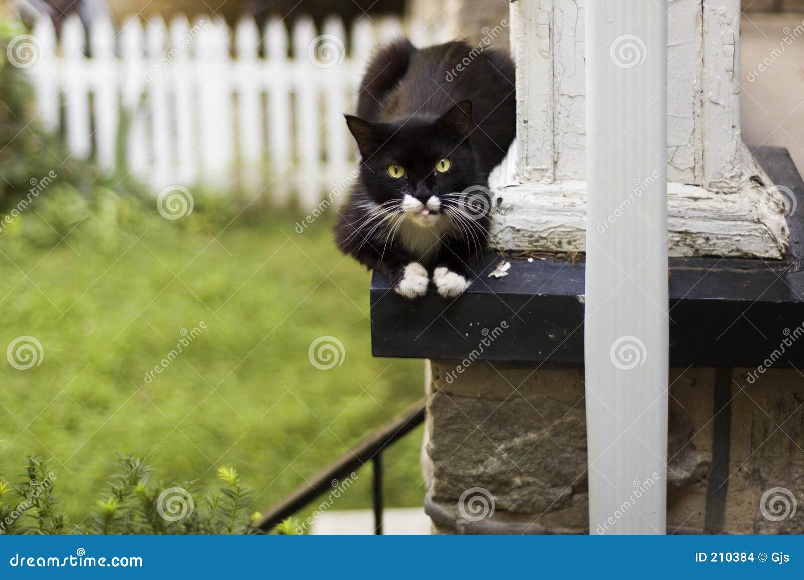 Gatto che riposa su un portico
