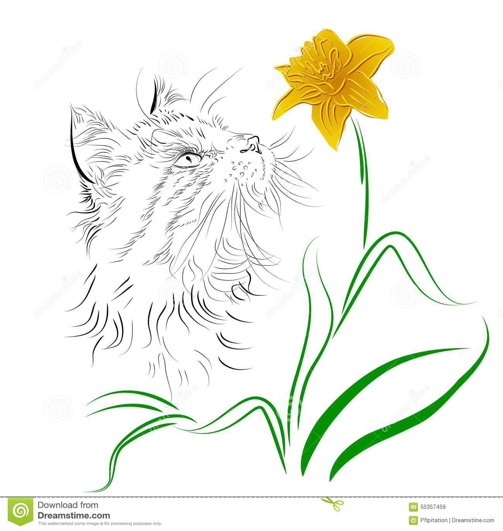 Gatto che sente l odore di un fiore