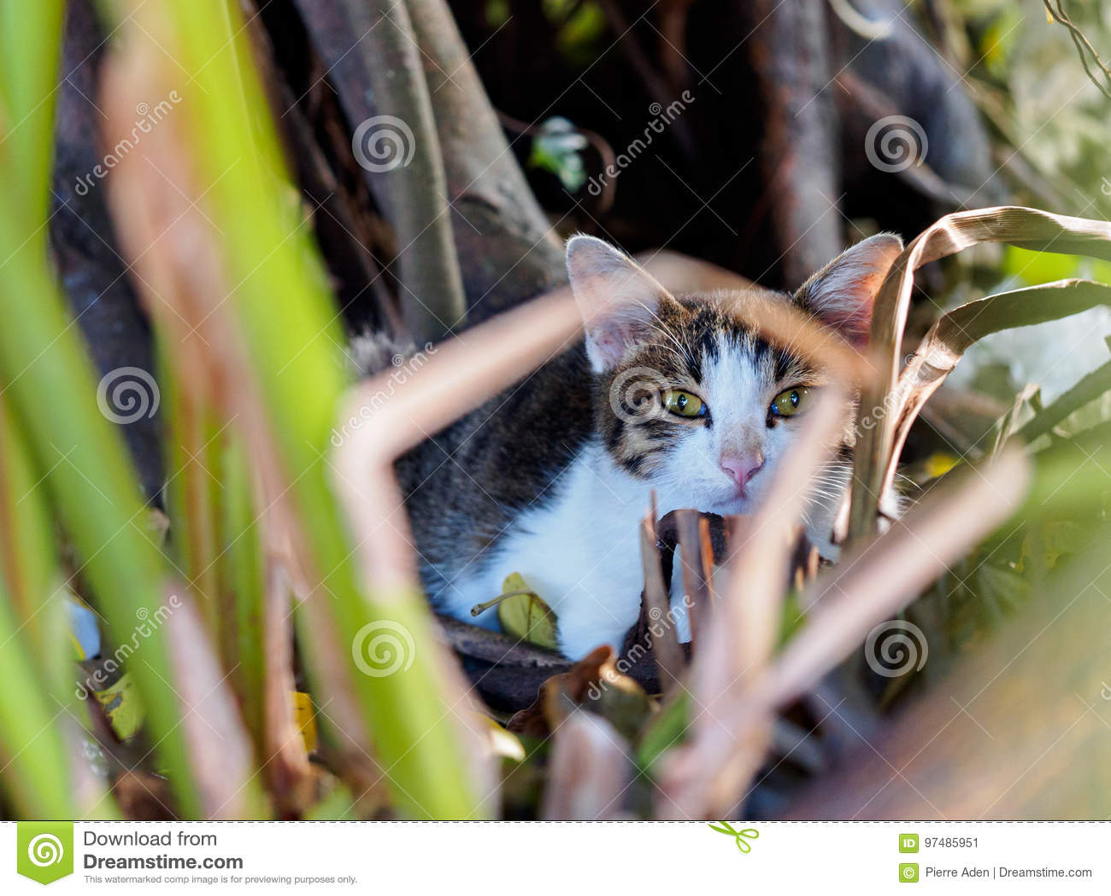 Gatto che si nasconde nel giardino