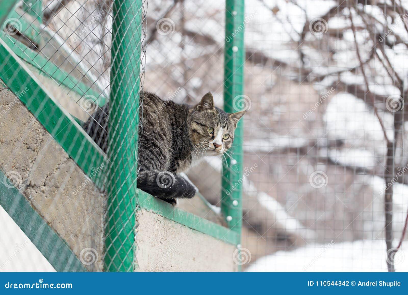 Gatto che si siede su un portico
