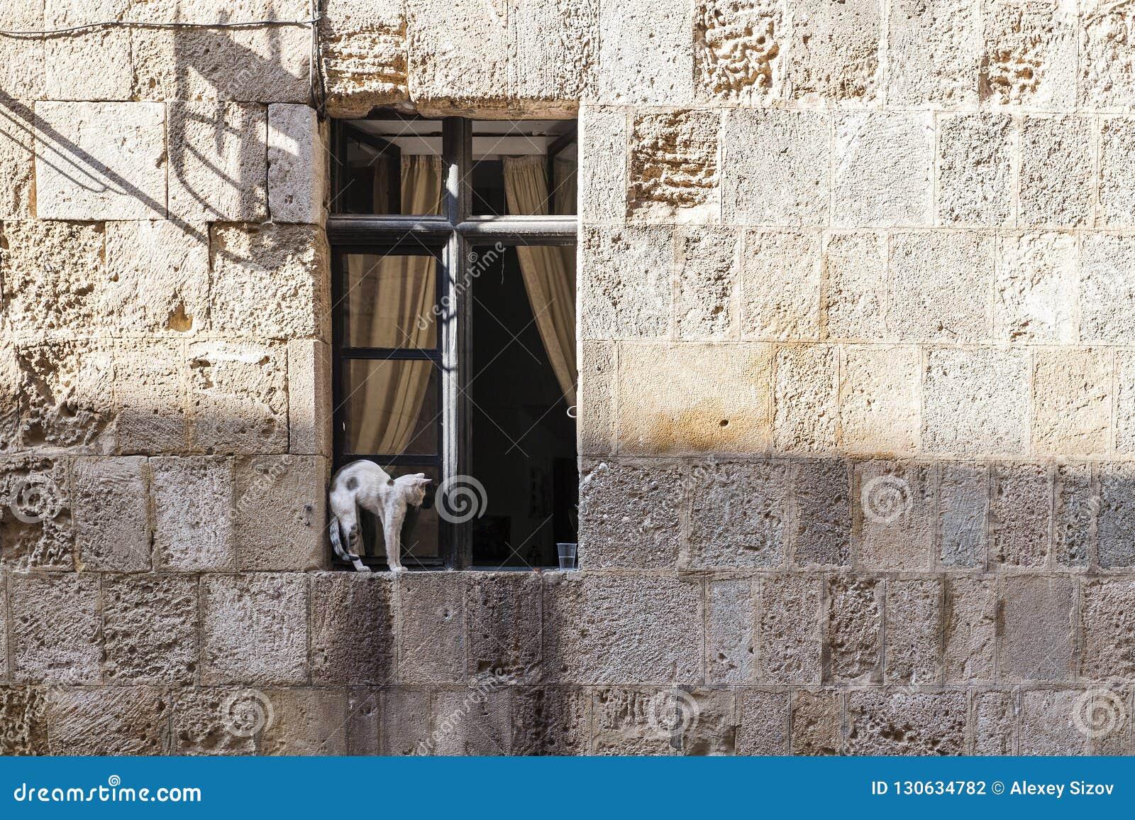 Gatto che si siede su una finestra