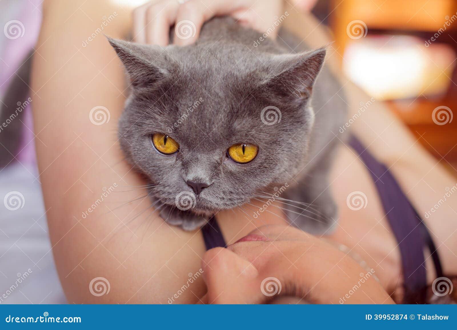 Gatto che si trova sul petto