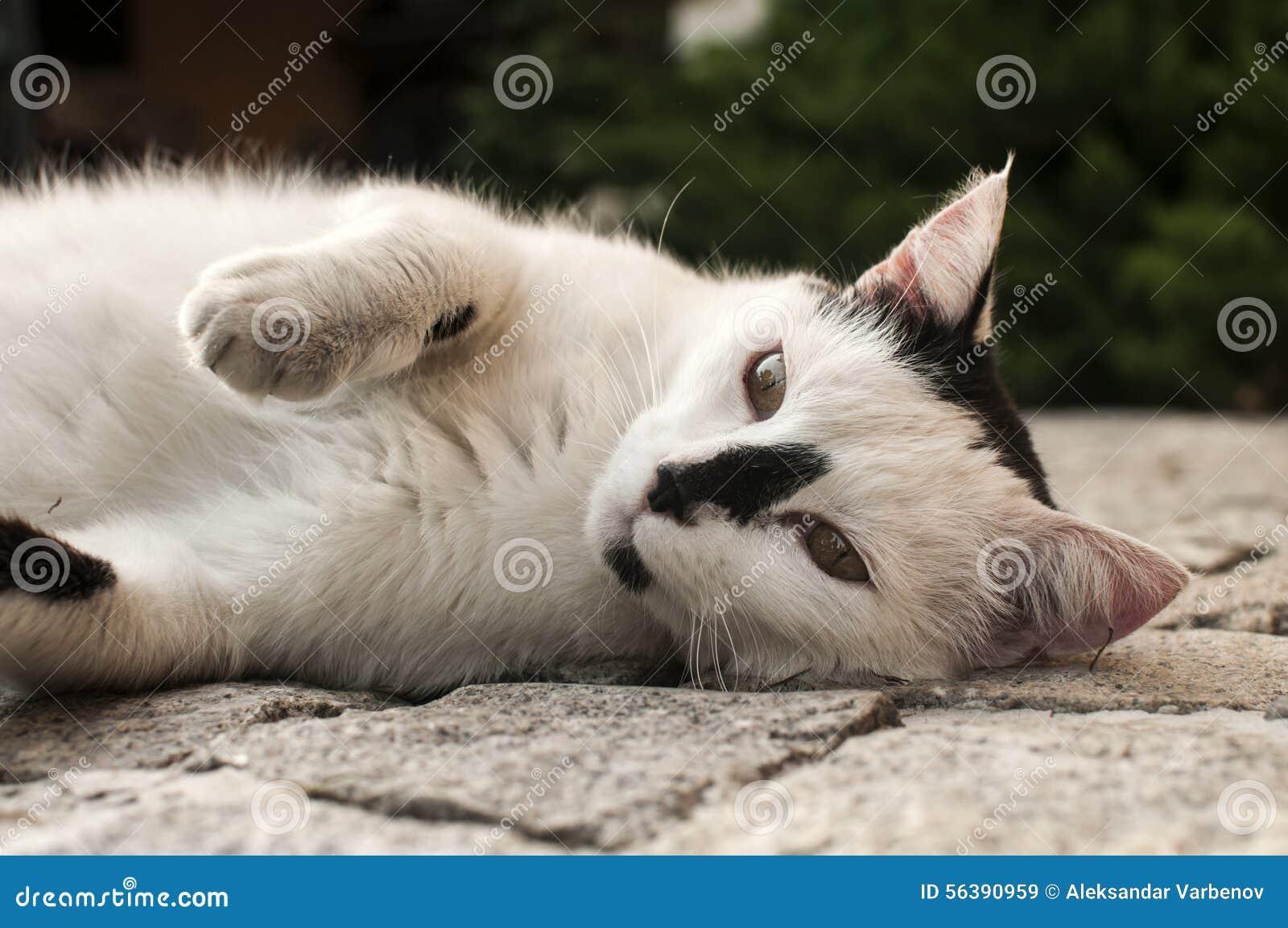 Gatto che si trova sulla superficie pavimentata del giardino