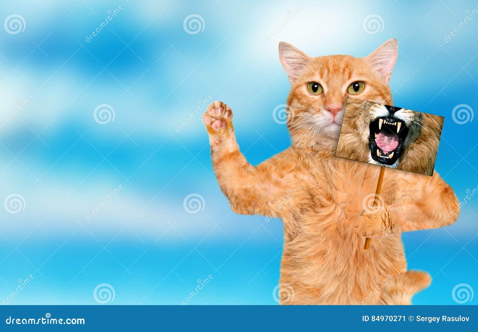 Gatto che tiene una carta con la bocca del leone