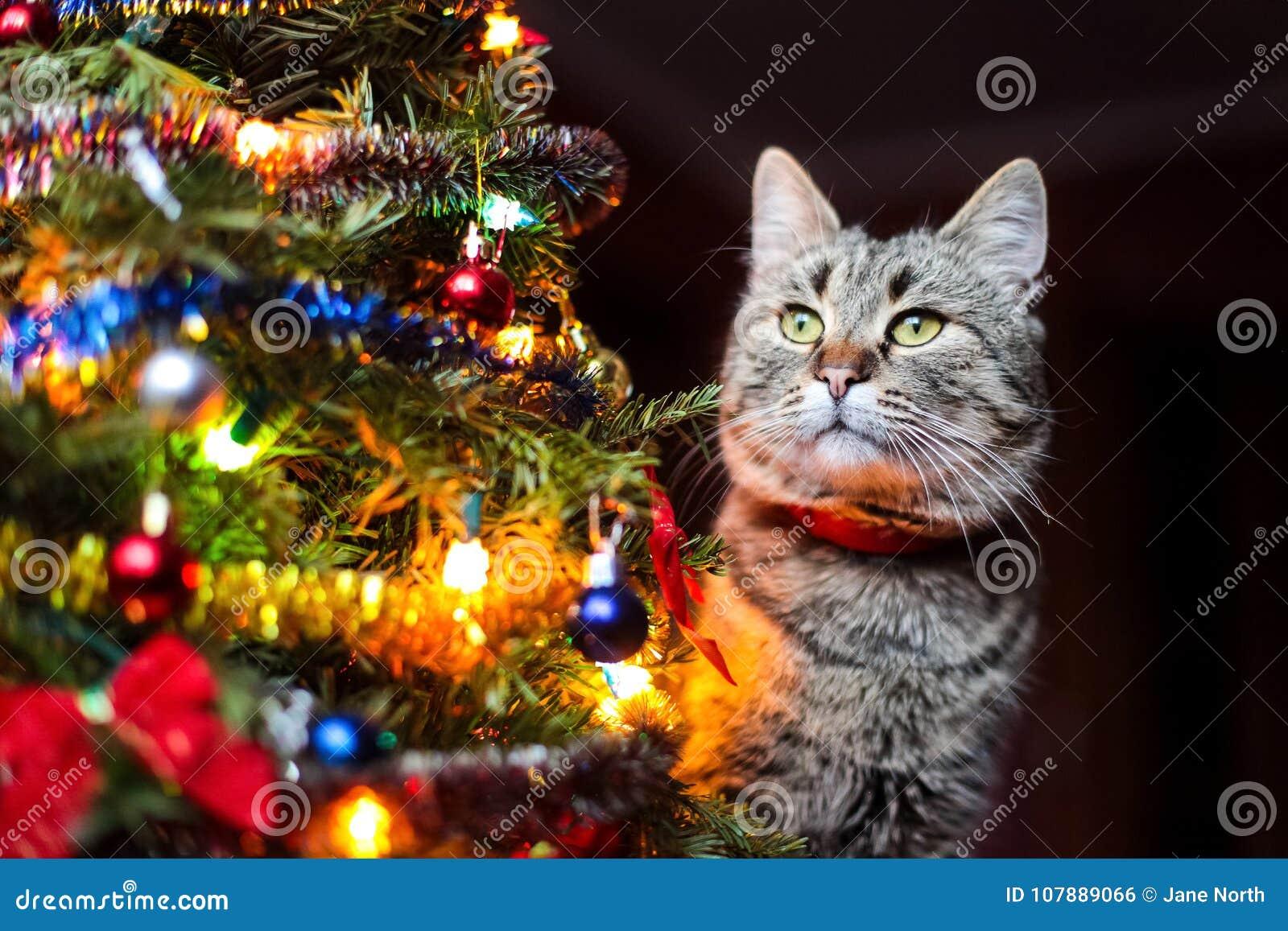 Decorazioni Per Casa Di Natale : Gatto con i regali di natale i giocattoli e le decorazioni per un