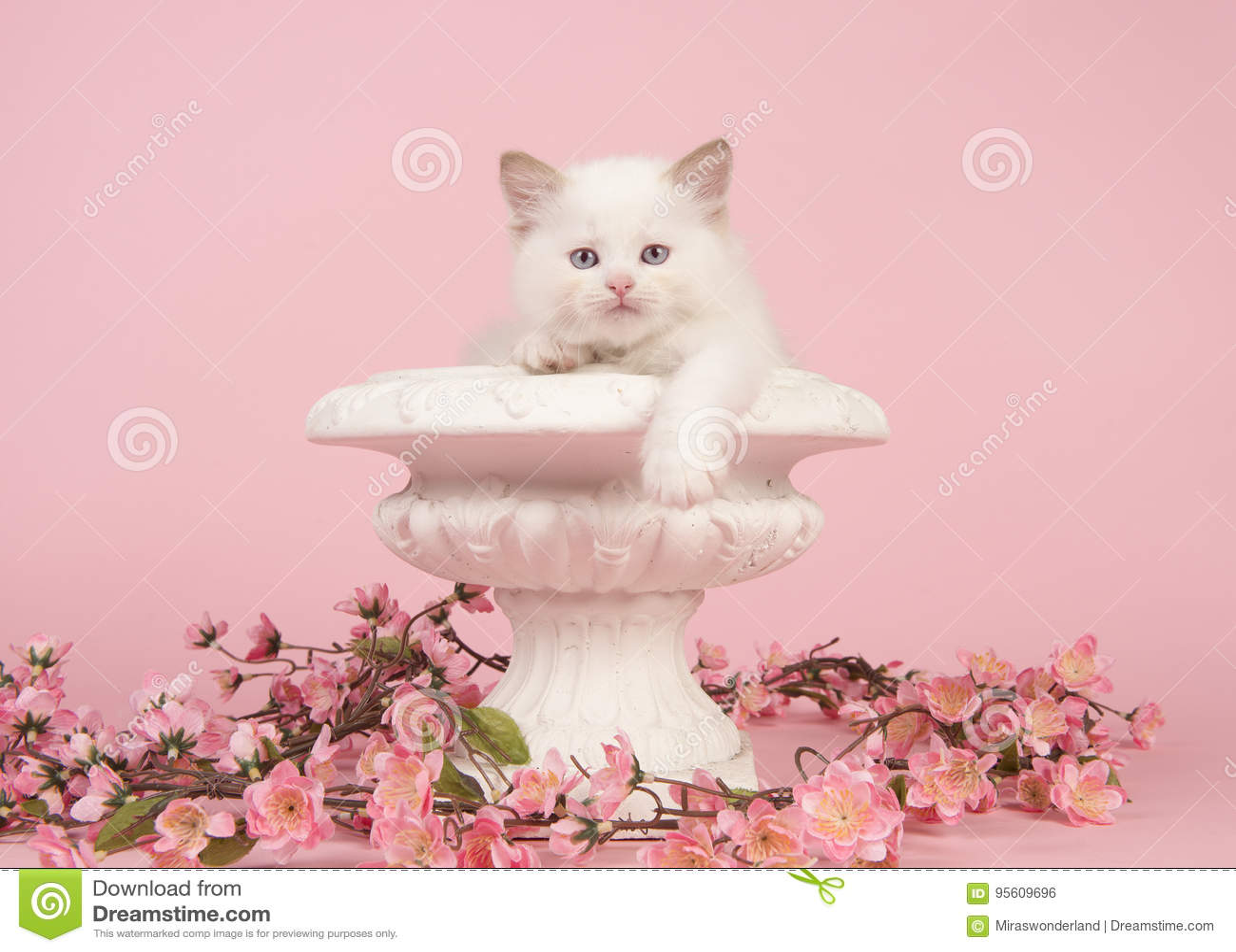 Gatto del bambino della bambola di straccio con gli occhi azzurri che appendono sopra il bordo di un vaso di fiore con i fiori ro
