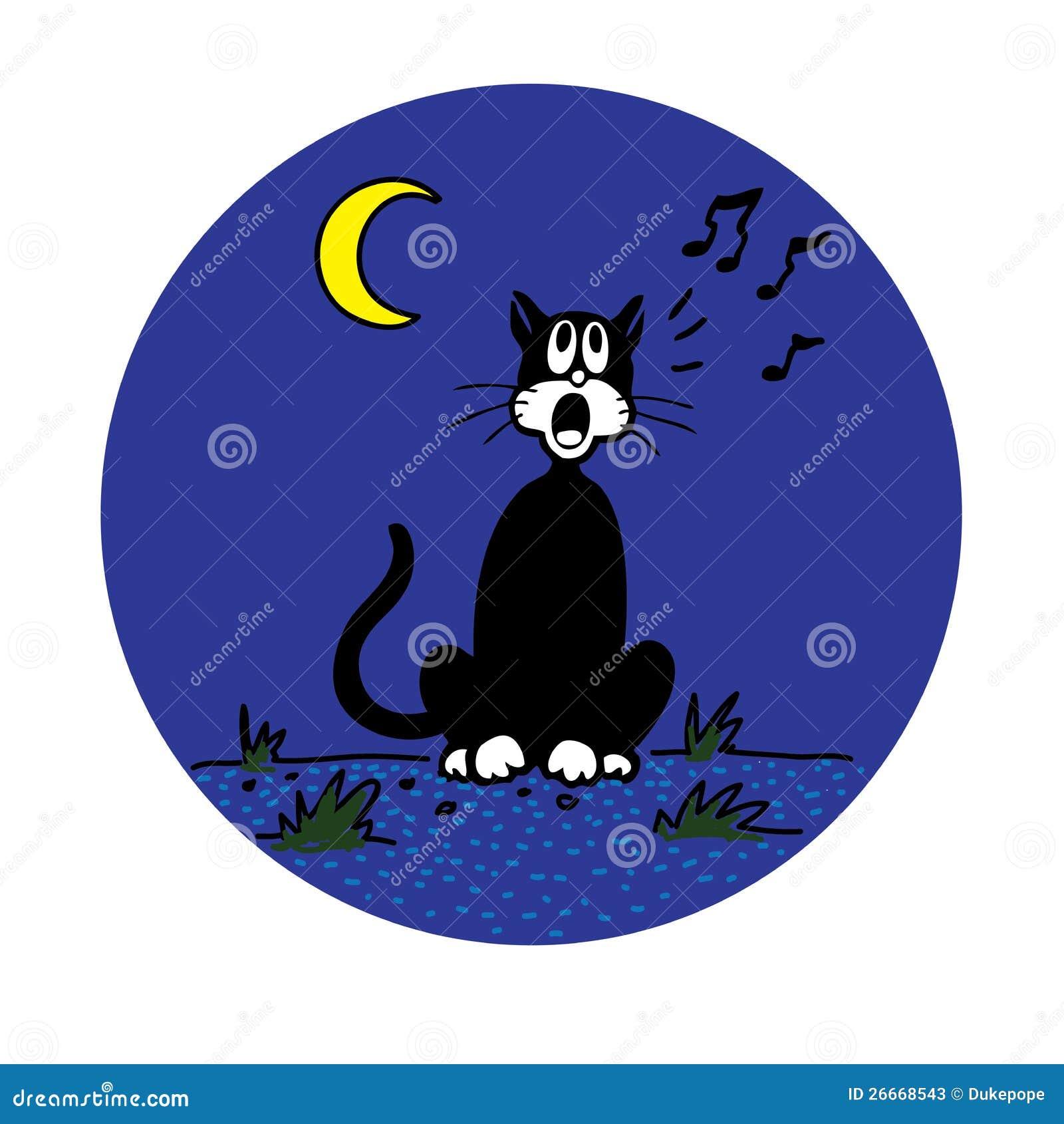 Gatto del cortile