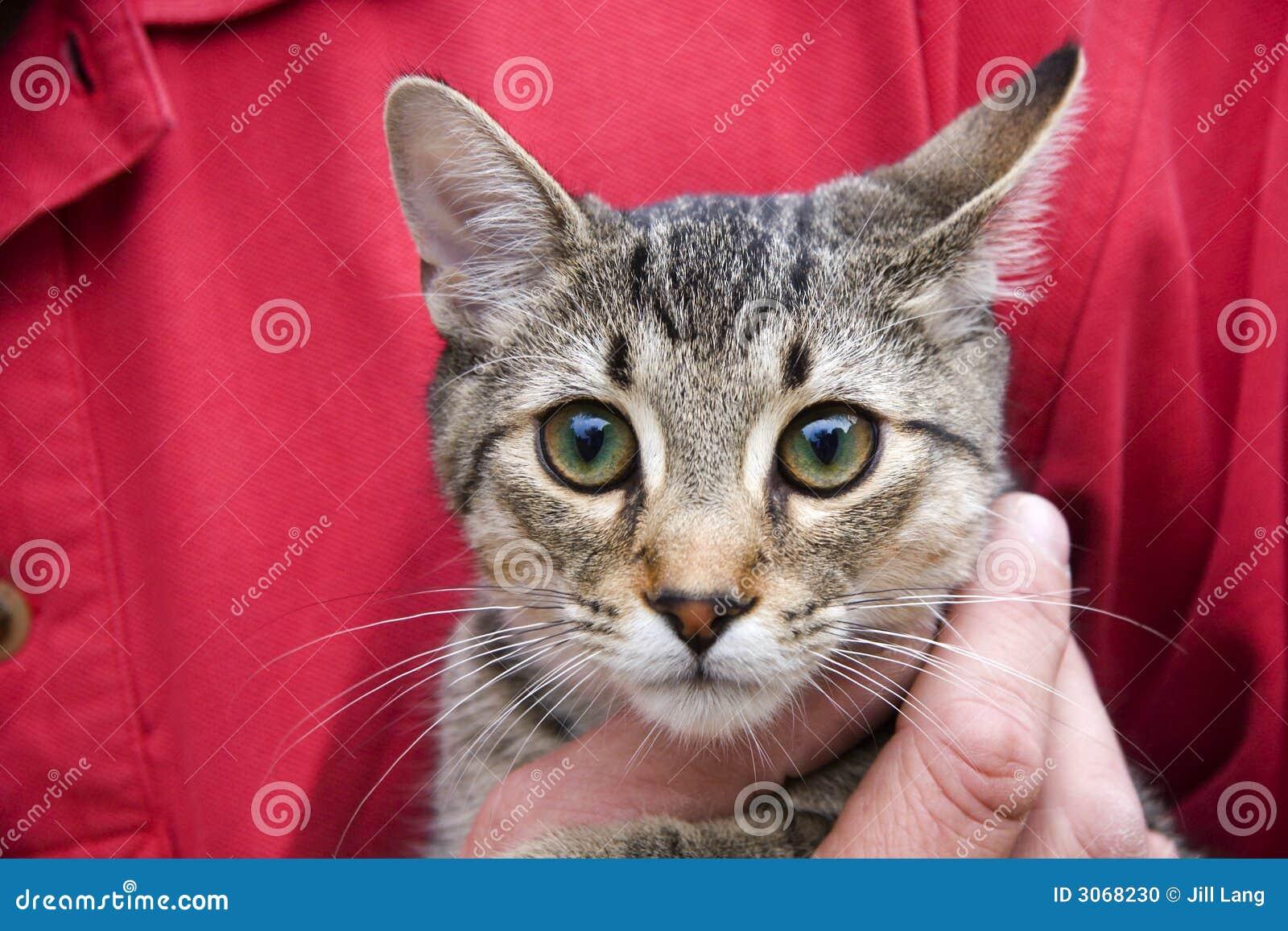Gatto del gattino fotografia stock immagine di bello - Immagine del gatto a colori ...