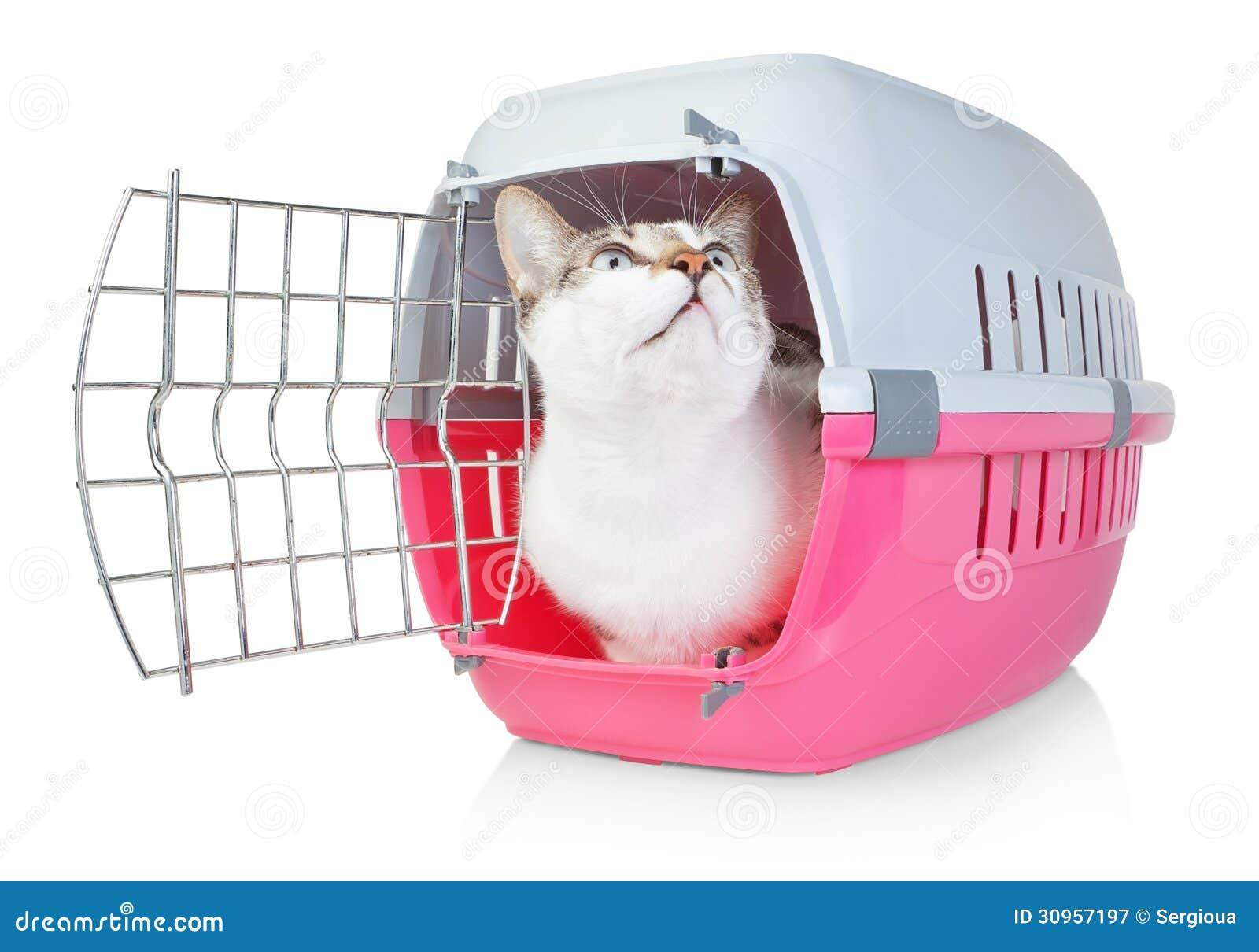 Gatto dell 39 animale domestico in una gabbia per trasporto for Felpa con marsupio porta gatto