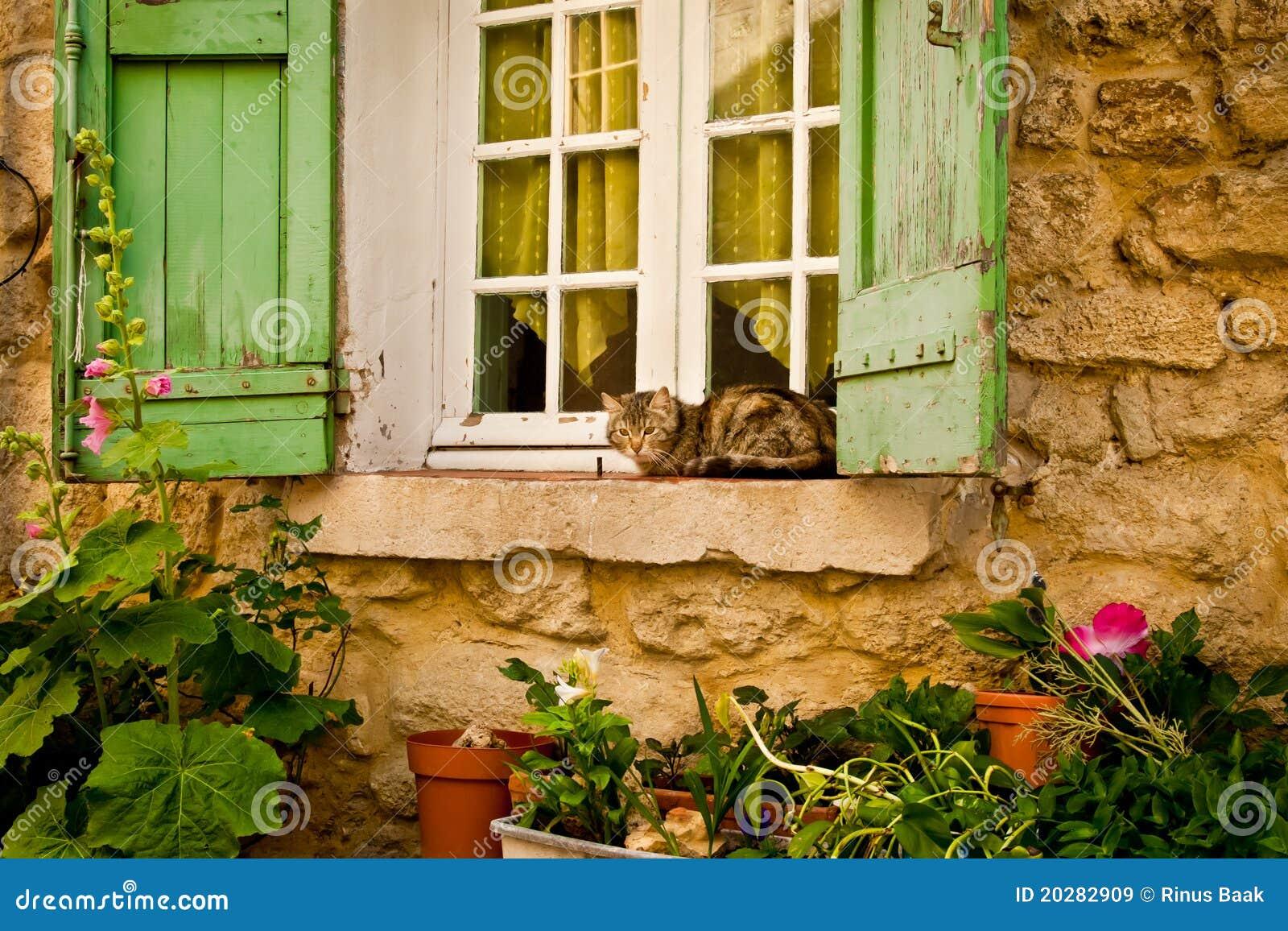Gatto della camera sul davanzale della finestra immagine stock immagine di pianta gatto 20282909 - Davanzale finestra ...