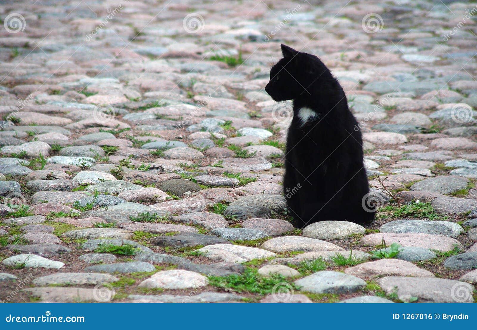 Gatto della città
