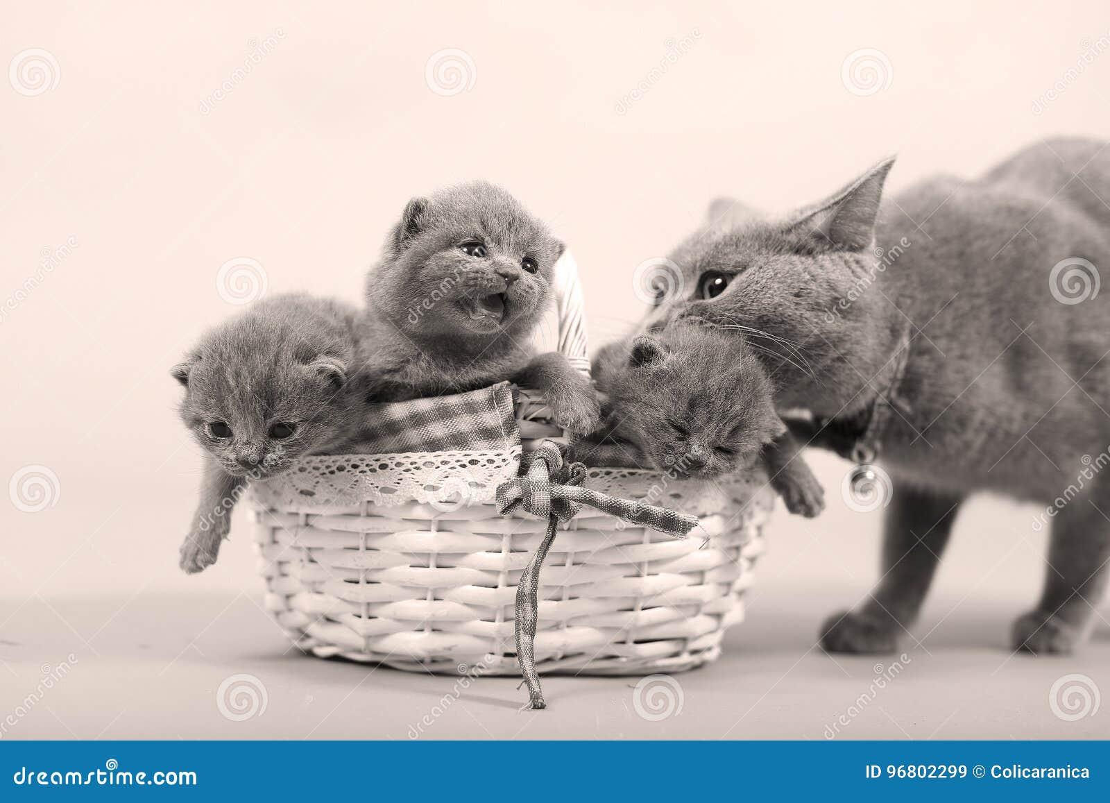 Gatto della madre con il suo bambino